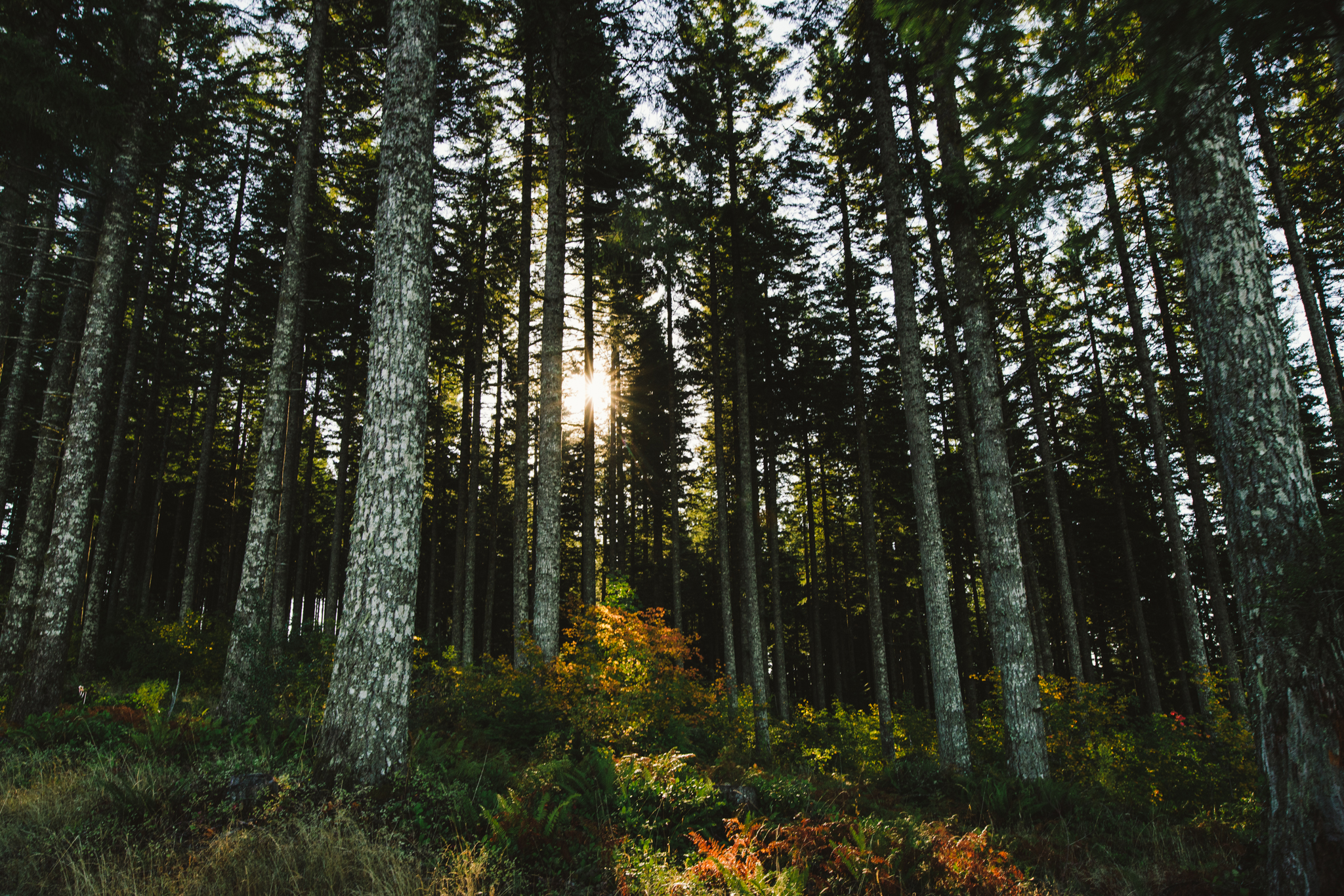 ©The Ryans Photography - Oregon Santiam Forest Lifestyle-013.jpg