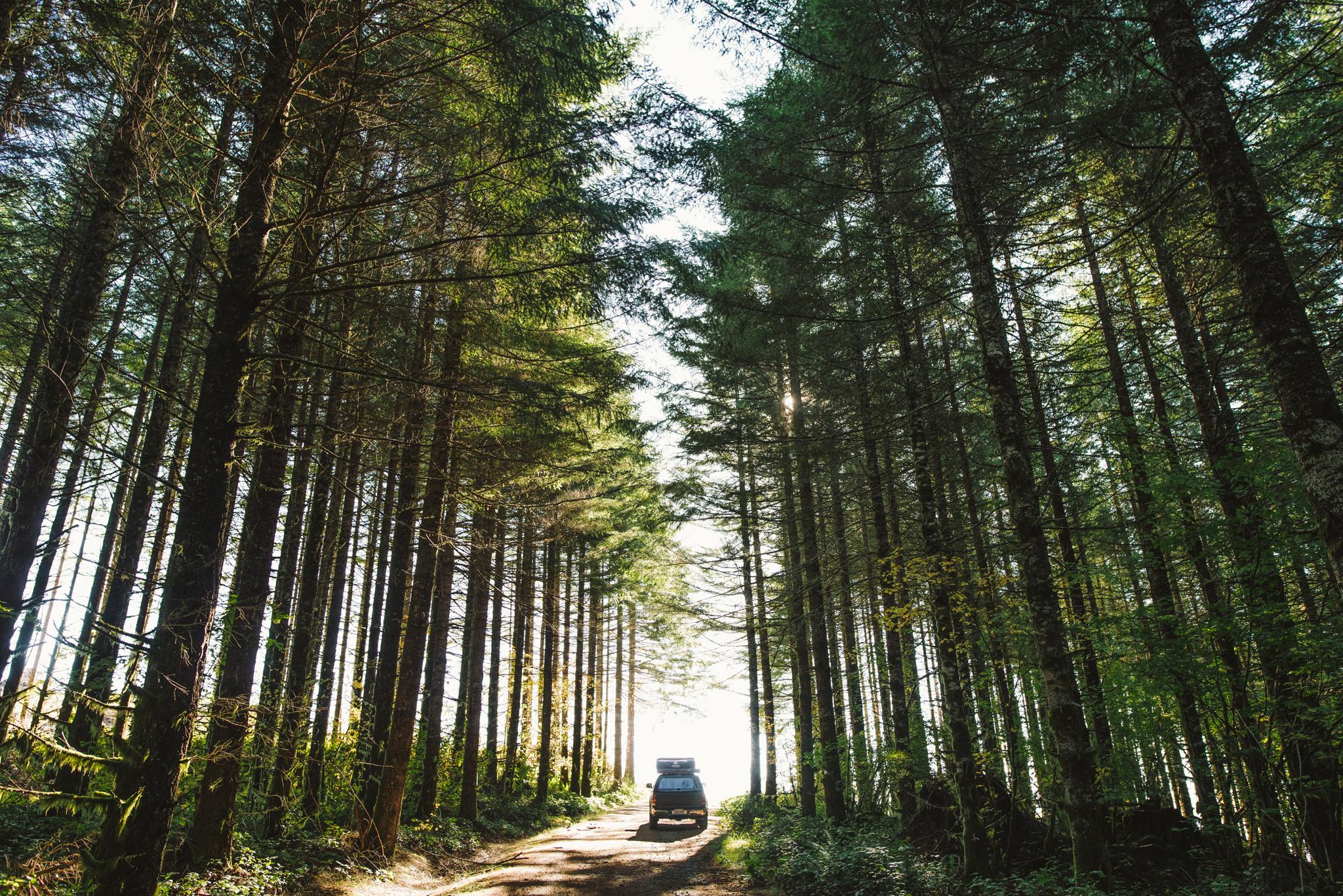 ©The Ryans Photography - Oregon Santiam Forest Lifestyle-021.jpg