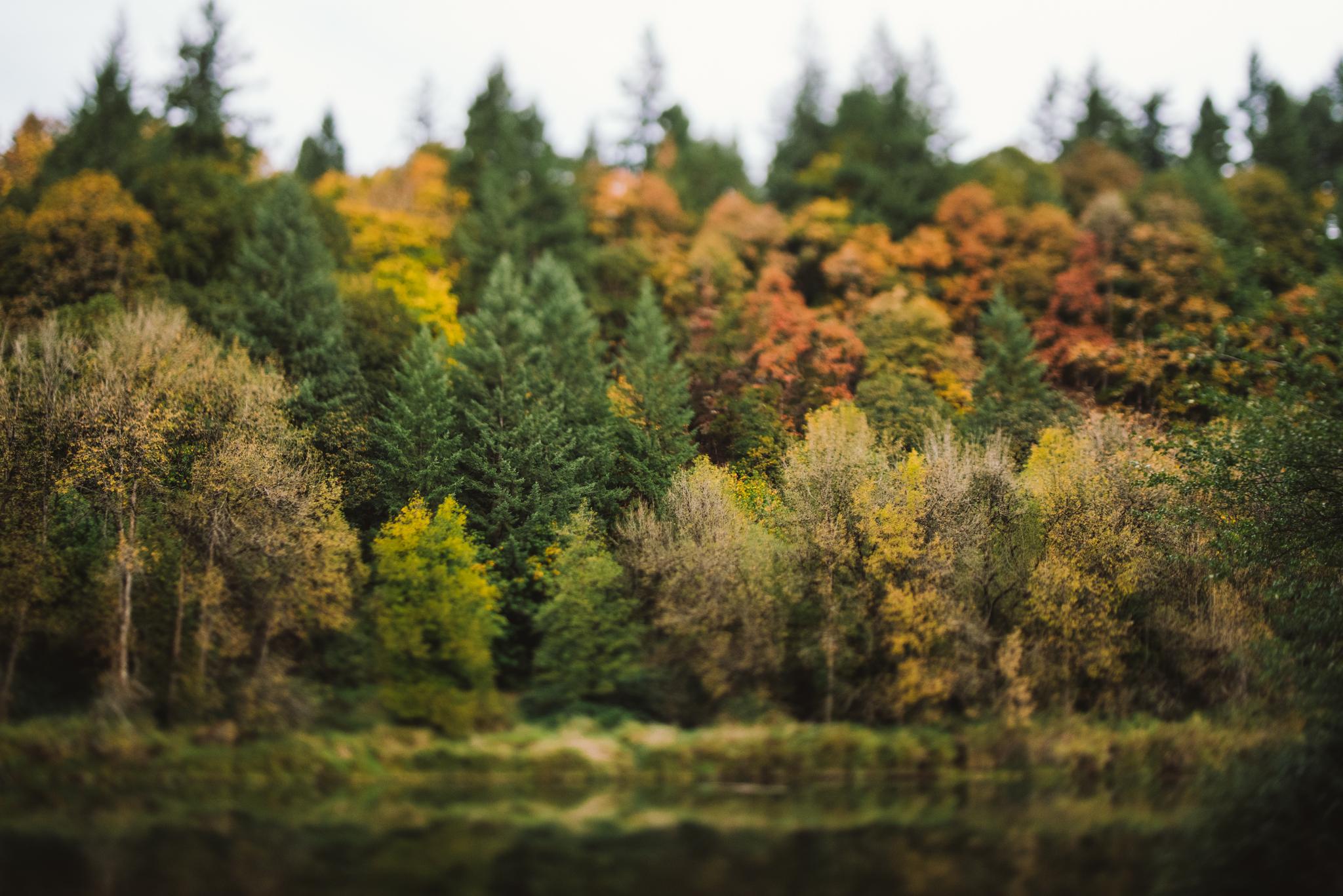 ©The Ryans Photography - Oregon Santiam Forest Lifestyle-028.jpg