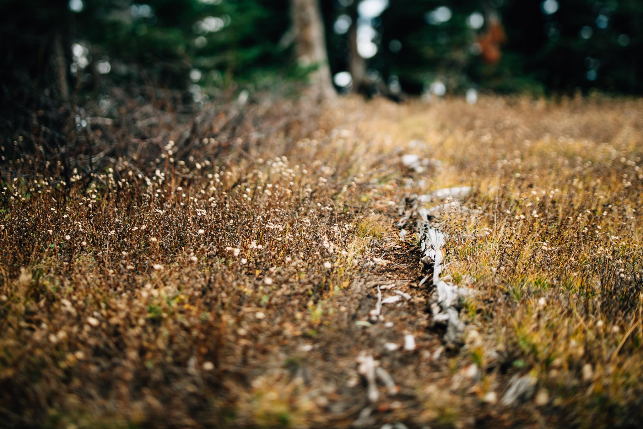 The Ryans Photography - Mt. Hood Oregon Adventure-015.jpg