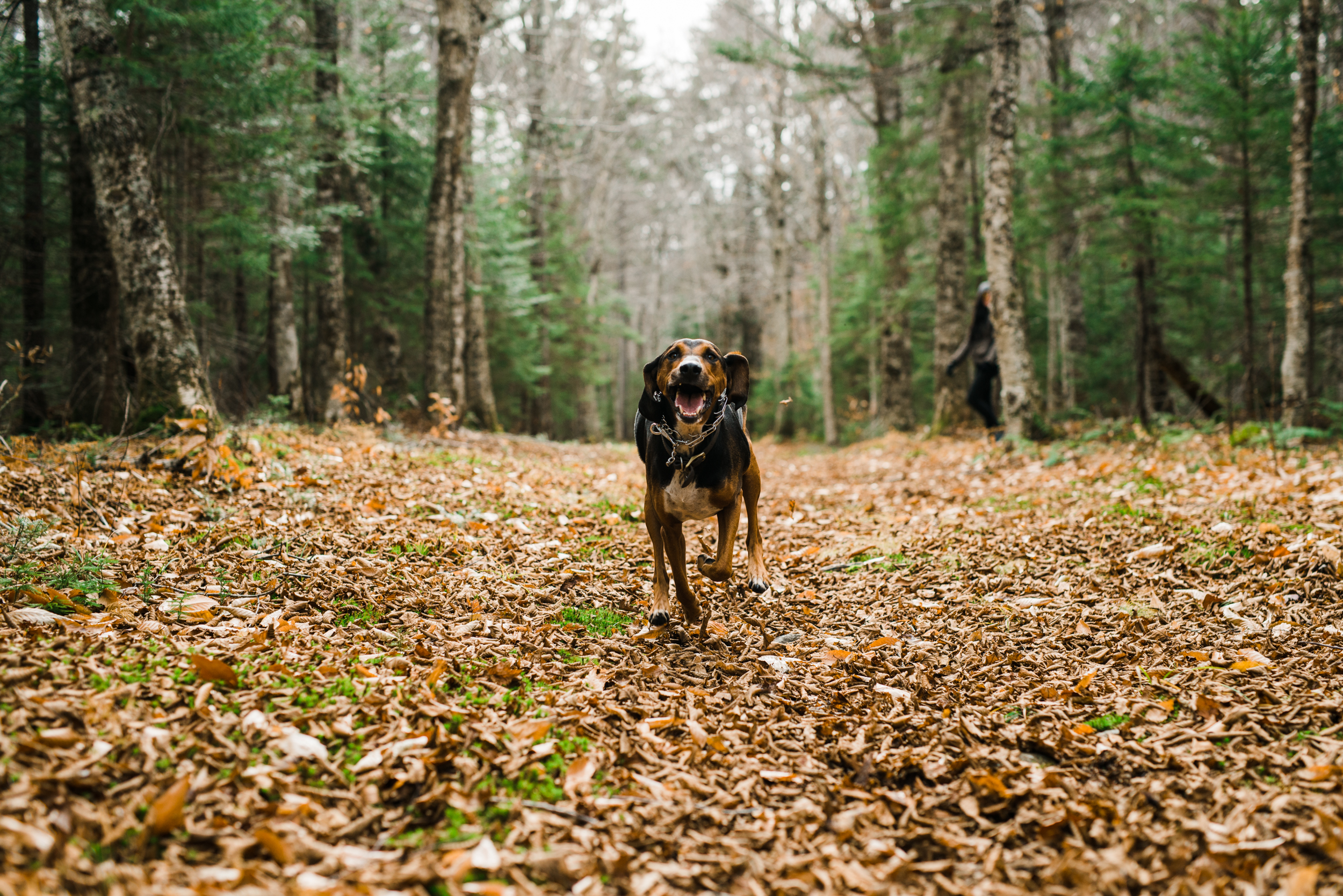 ©The Ryans Photography - White Mountain, New Hampshire Adventure-024.jpg