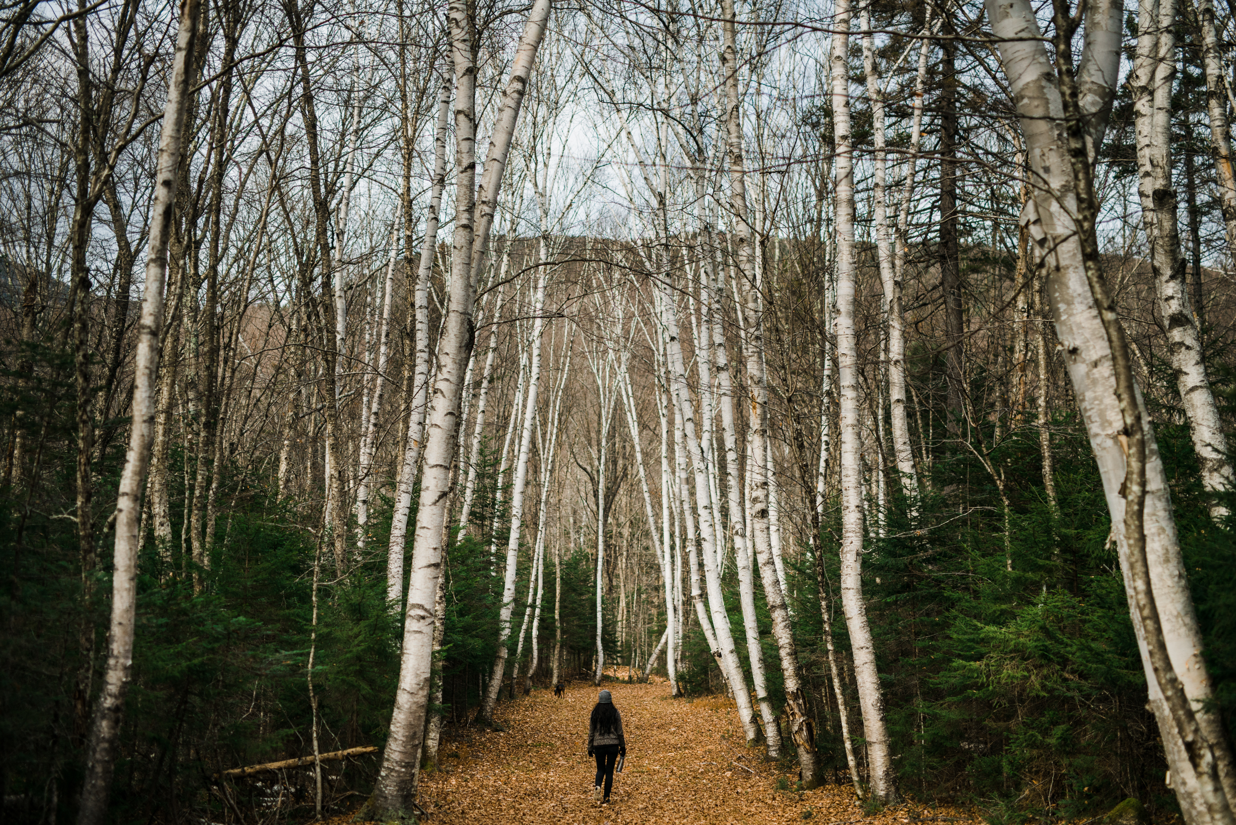 ©The Ryans Photography - White Mountain, New Hampshire Adventure-030.jpg