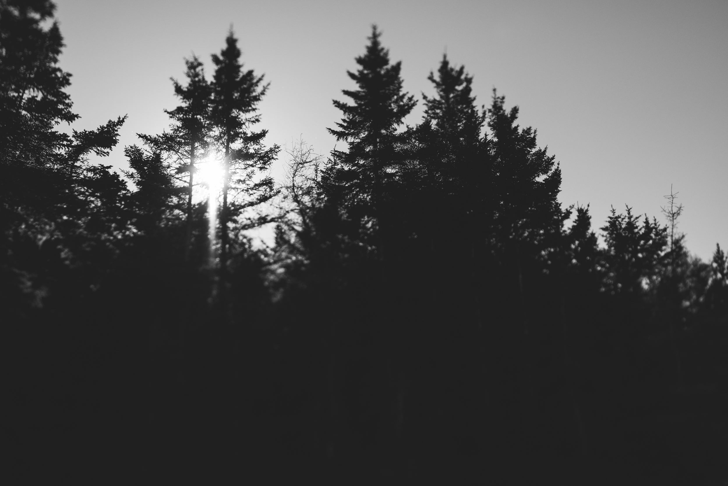 ©The Ryans Photography - Acadia, Maine-015.jpg