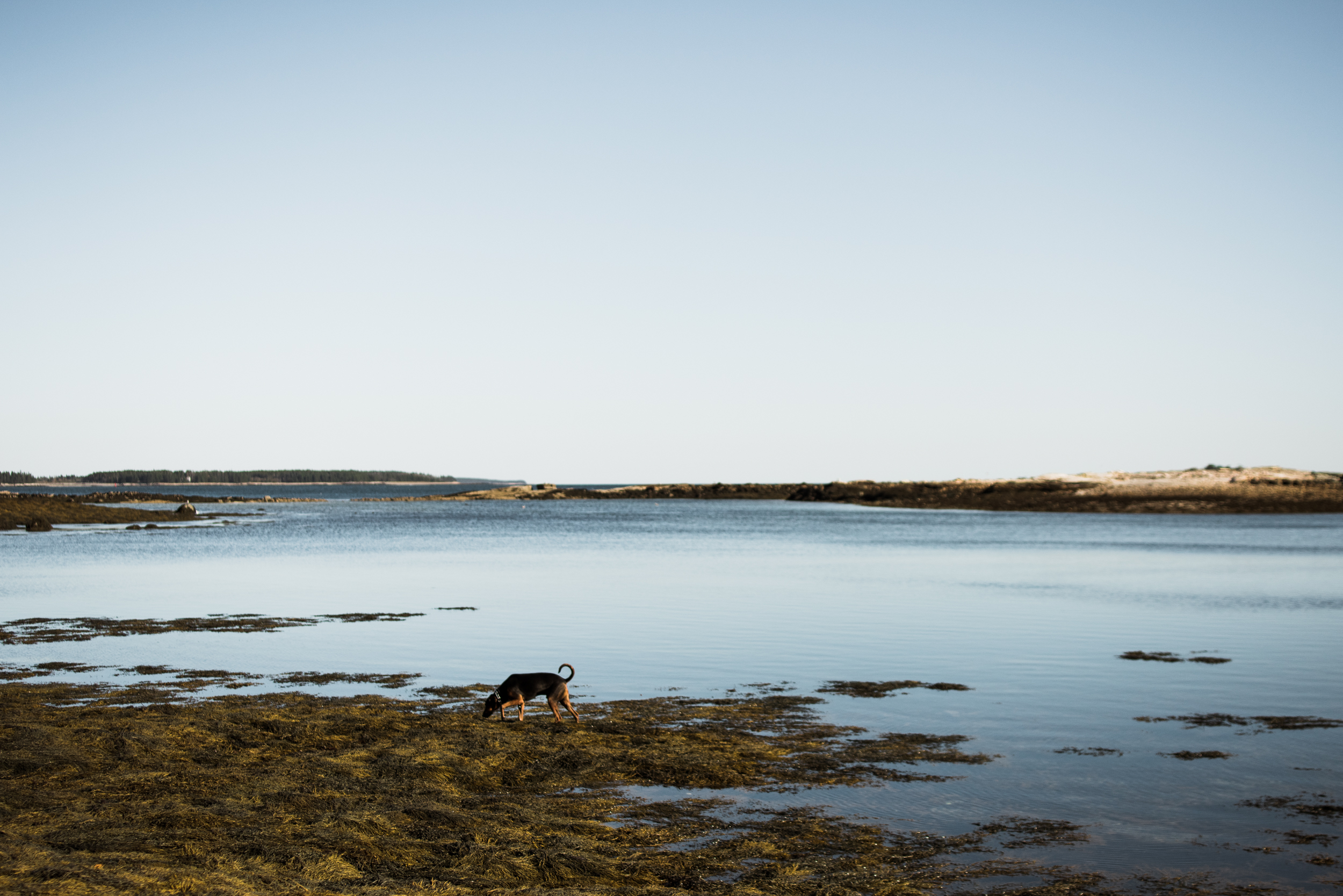 ©The Ryans Photography - Acadia, Maine-021.jpg