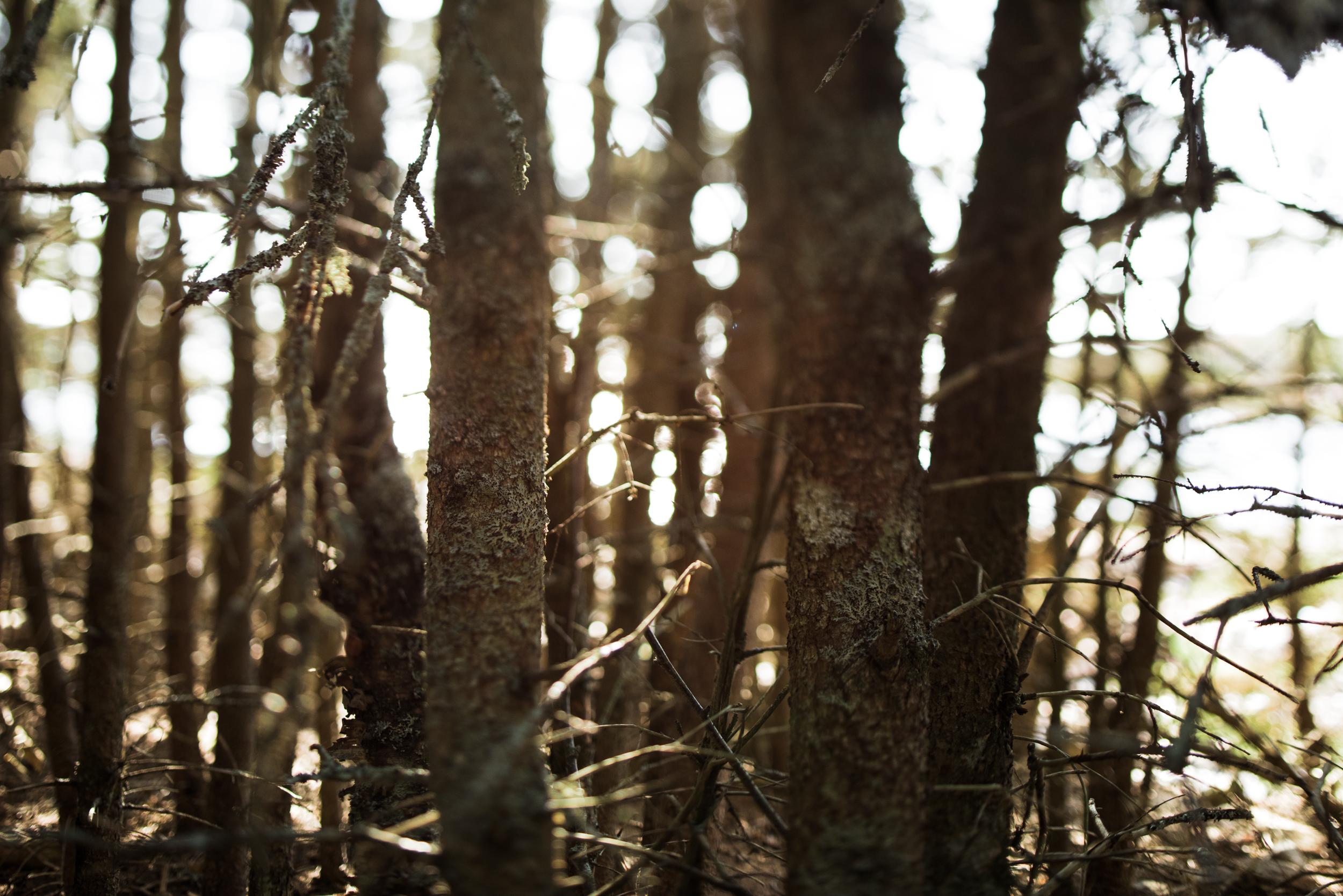 ©The Ryans Photography - Acadia, Maine-035.jpg