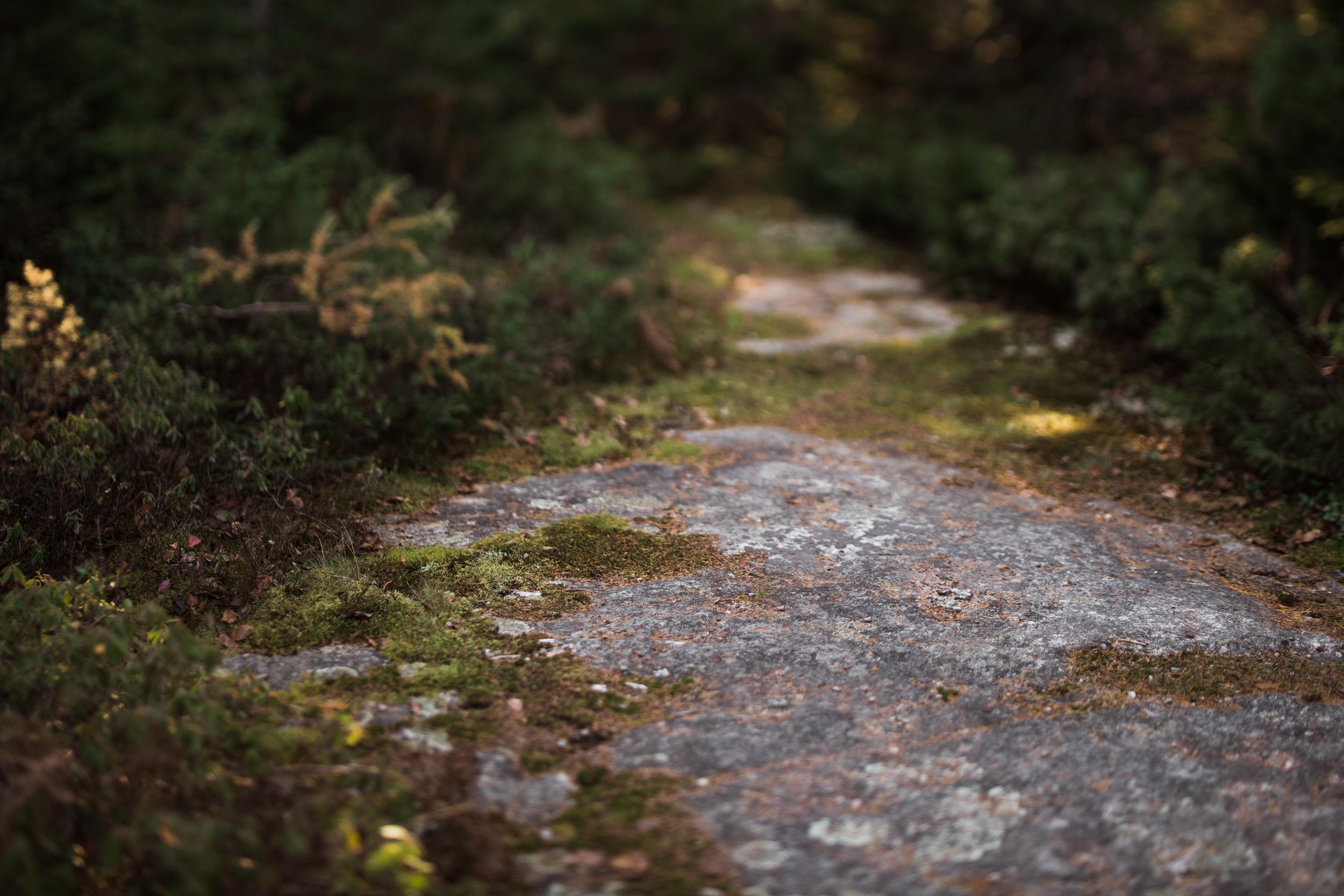 ©The Ryans Photography - Acadia, Maine-036.jpg