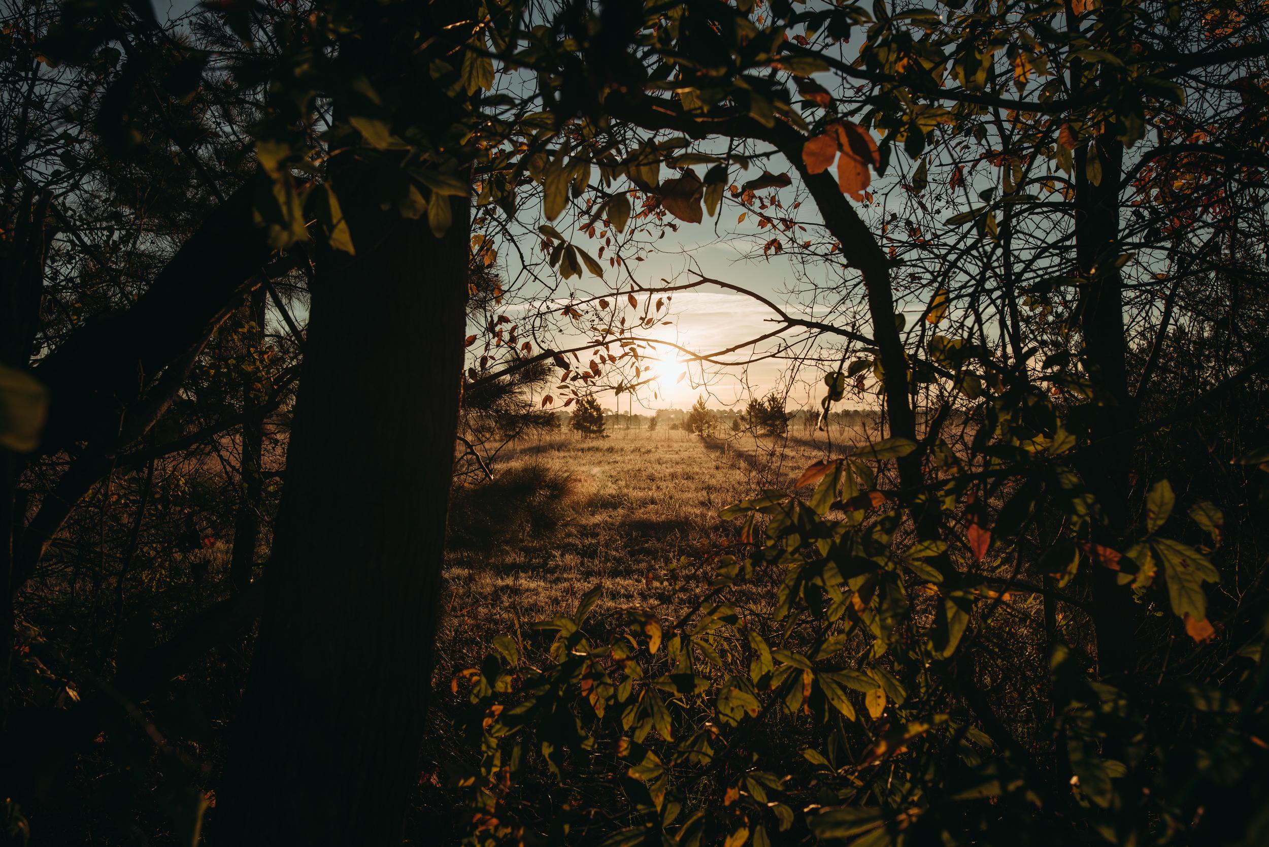 ©The Ryans Photography - North Carolina Swamp-001.jpg