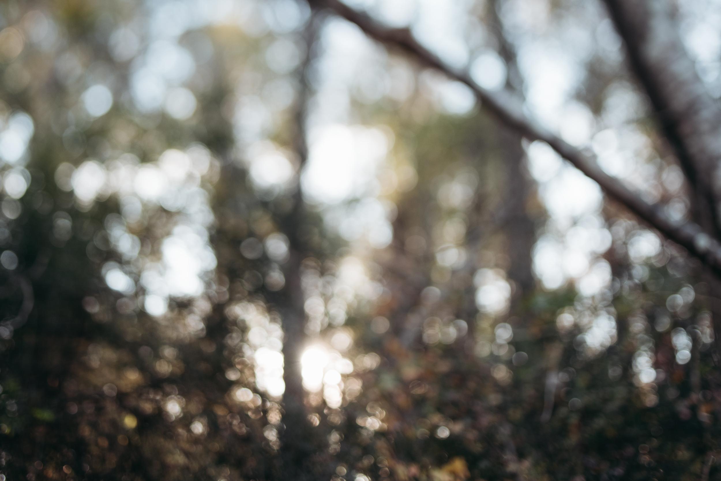 ©The Ryans Photography - North Carolina Swamp-010.jpg