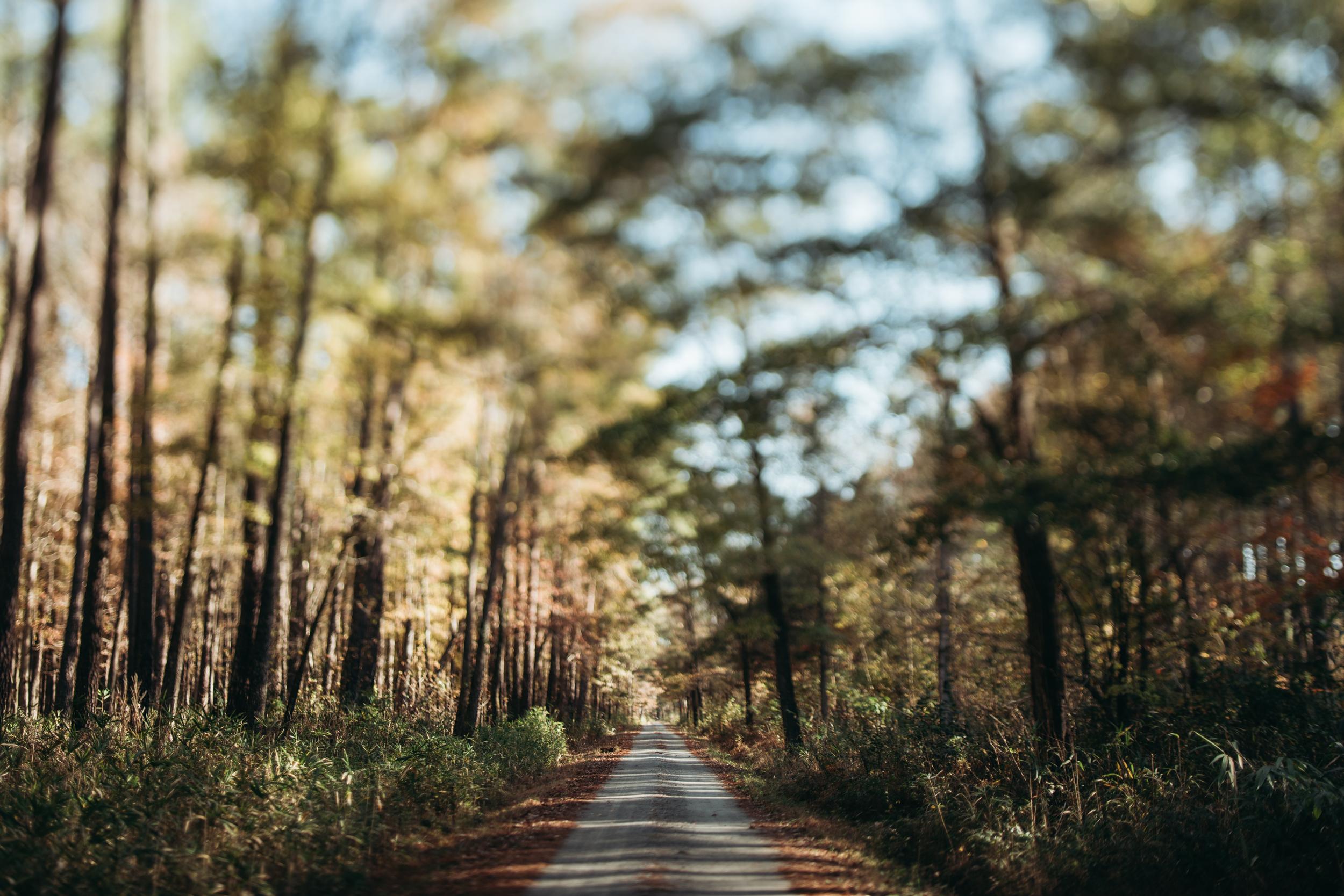 ©The Ryans Photography - North Carolina Swamp-016.jpg