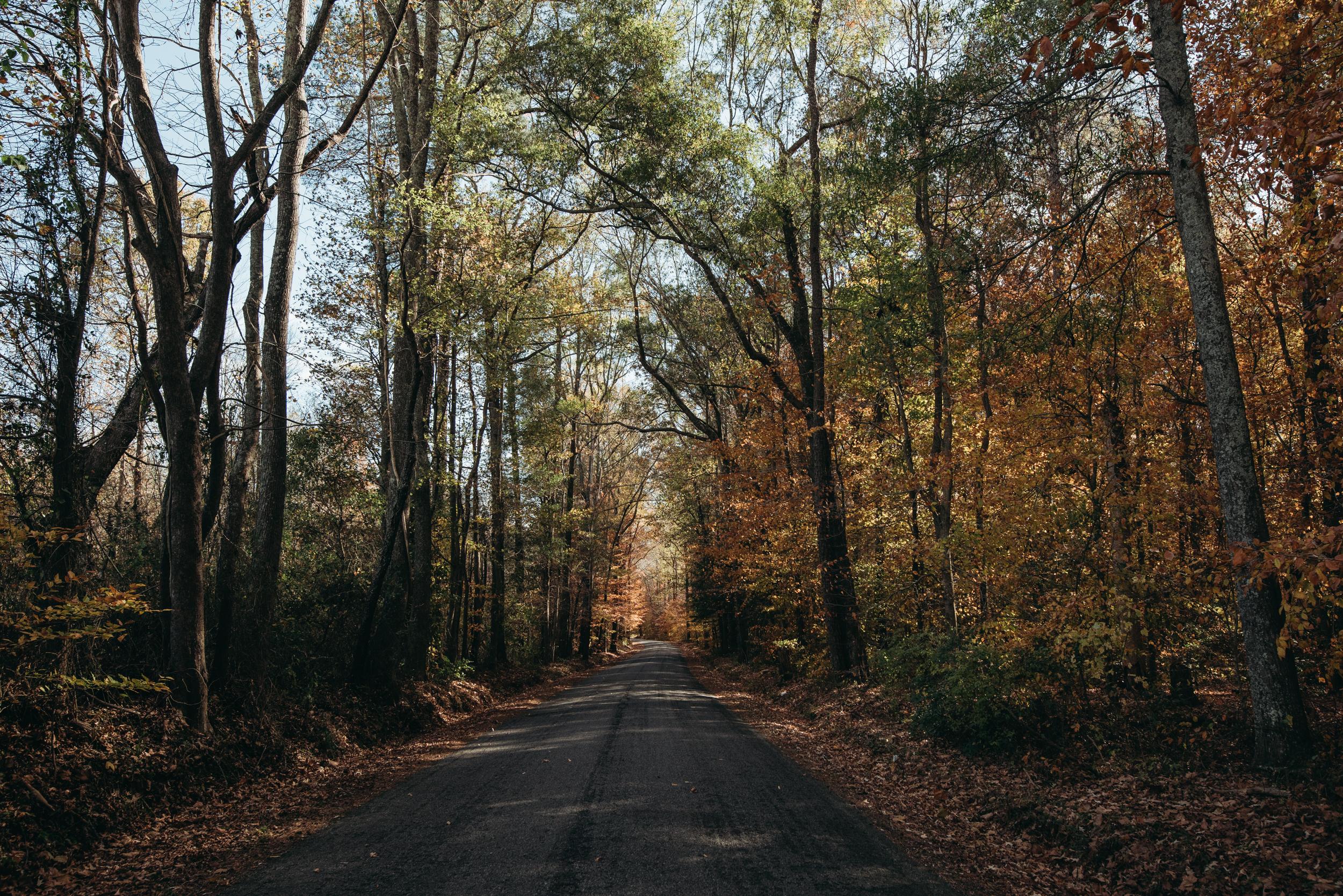 ©The Ryans Photography - North Carolina Swamp-043.jpg