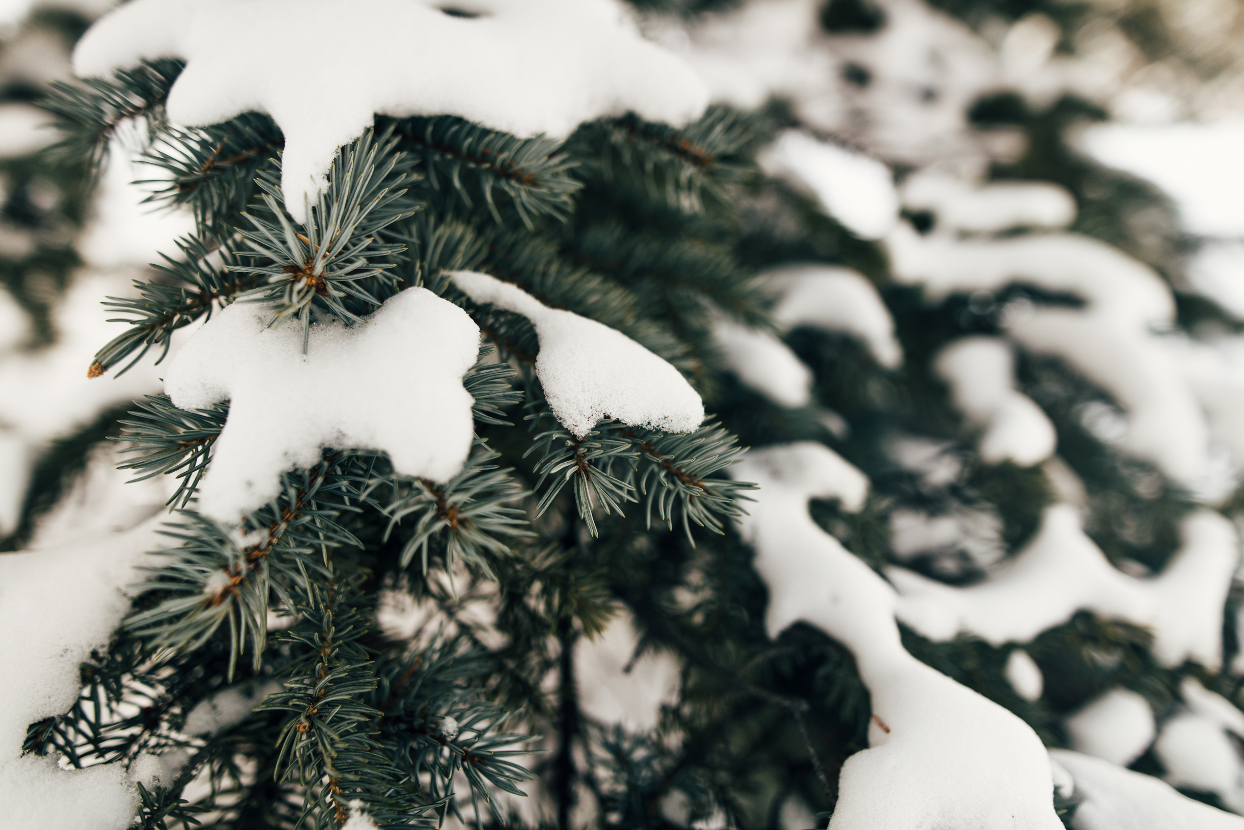 ©The Ryans Photography - Colordado Winter-026.jpg