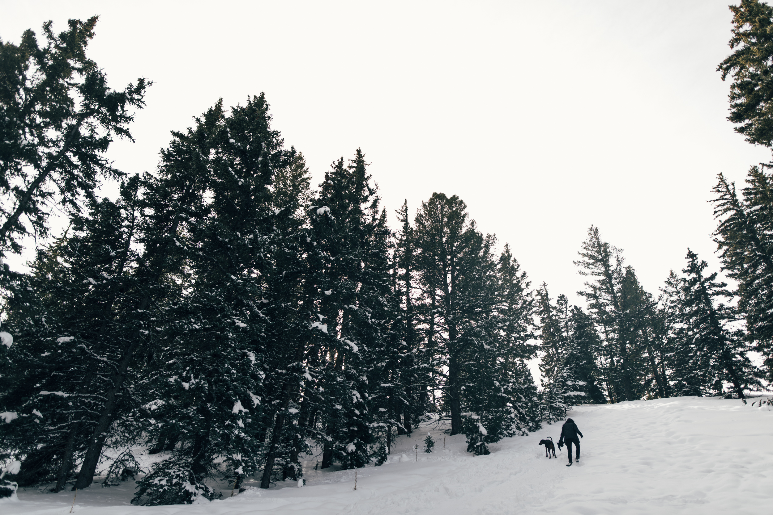 ©The Ryans Photography - Colordado Winter-027.jpg