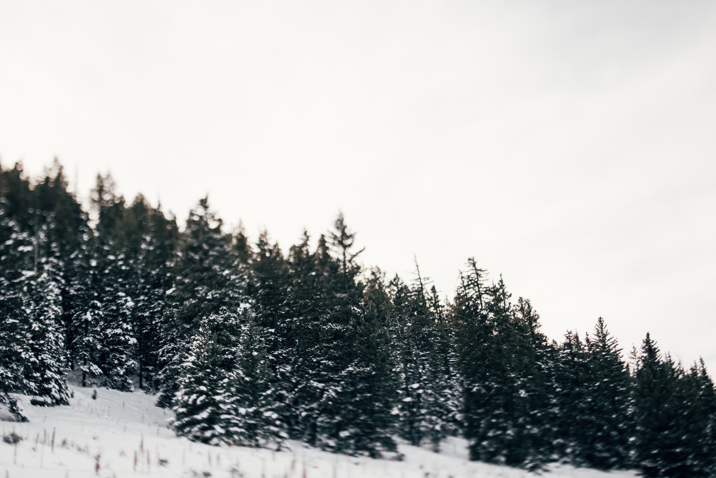 ©The Ryans Photography - Colordado Winter-030.jpg