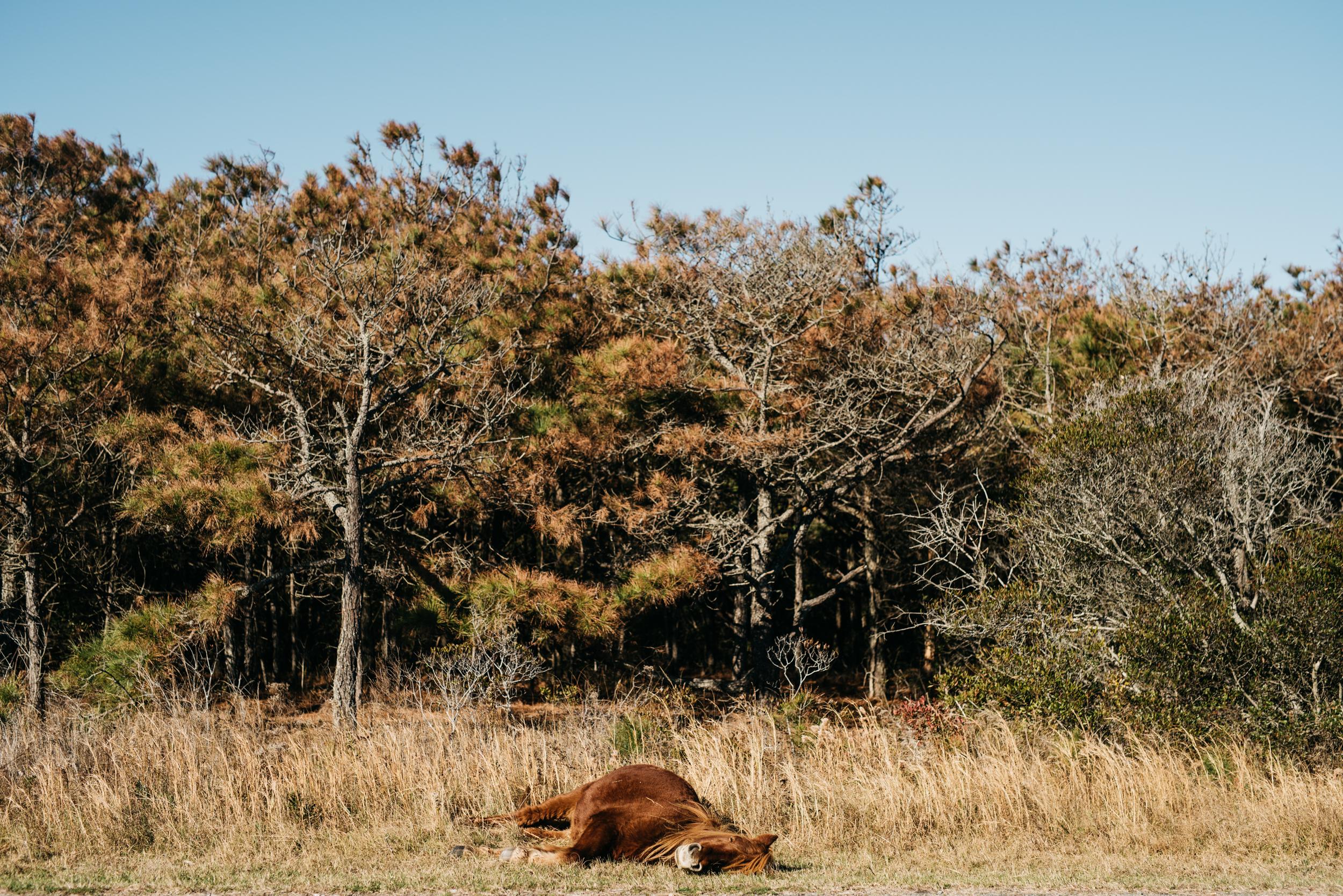©The Ryans Photography - Assateague Island-001.jpg