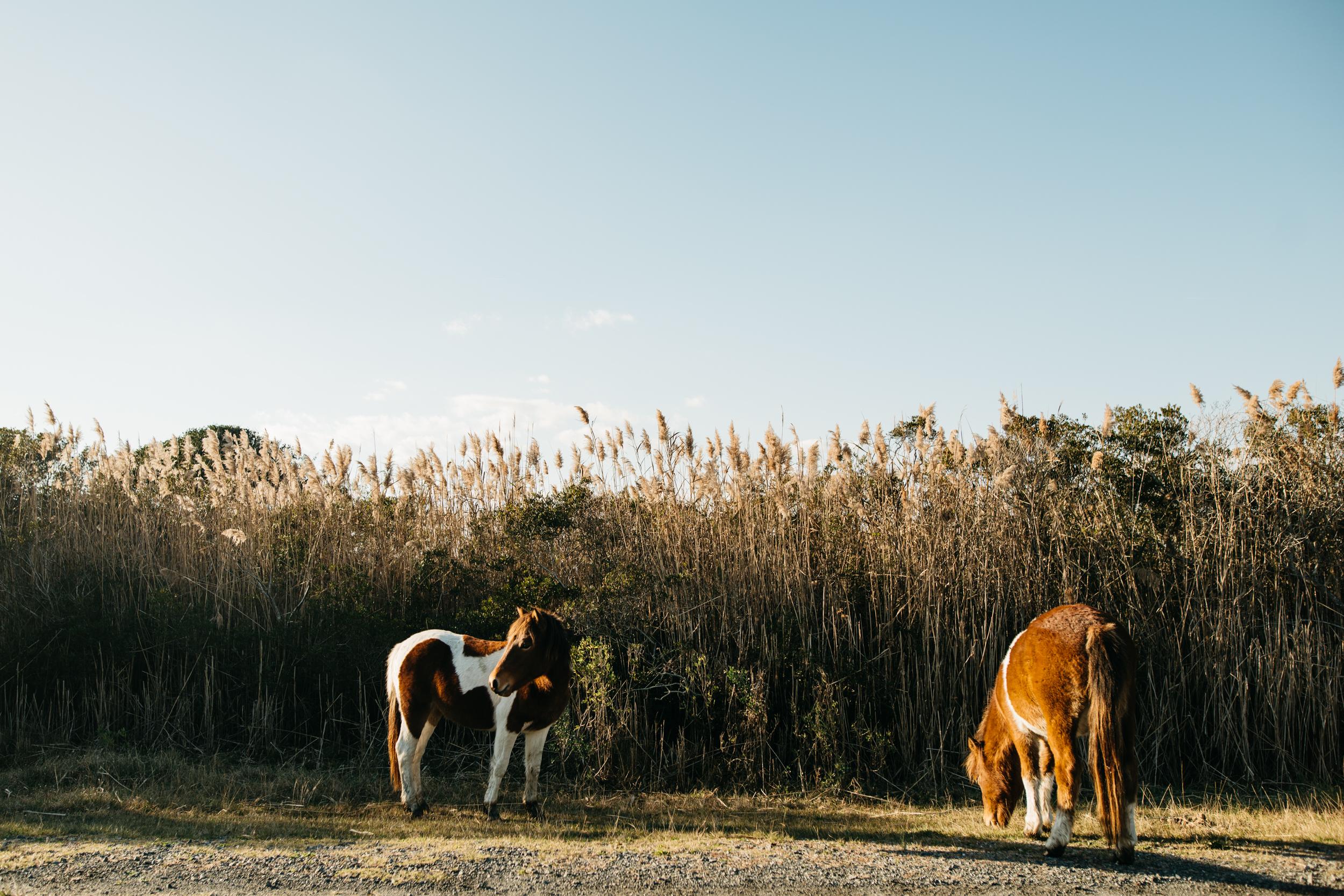 ©The Ryans Photography - Assateague Island-003.jpg