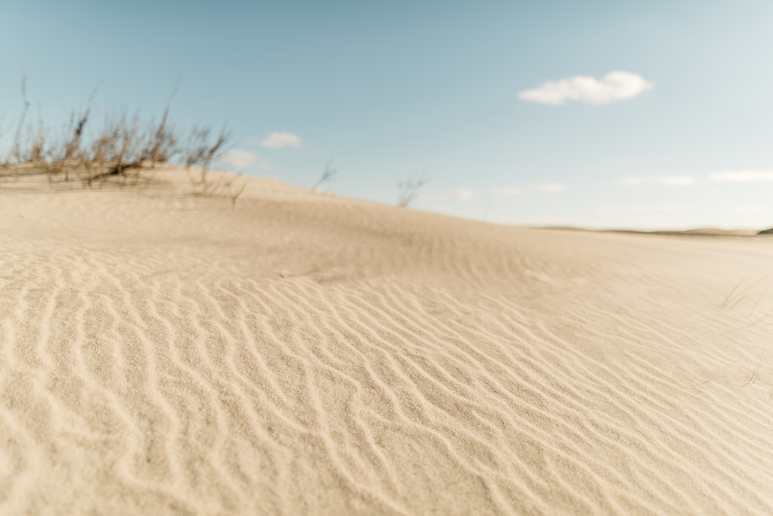 ©The Ryans Photography - Assateague Island-018.jpg