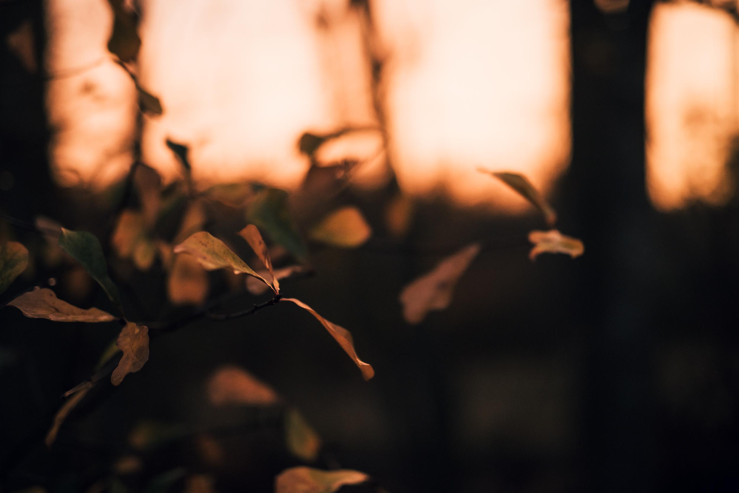 ©The Ryans Photography - Assateague Island-031.jpg