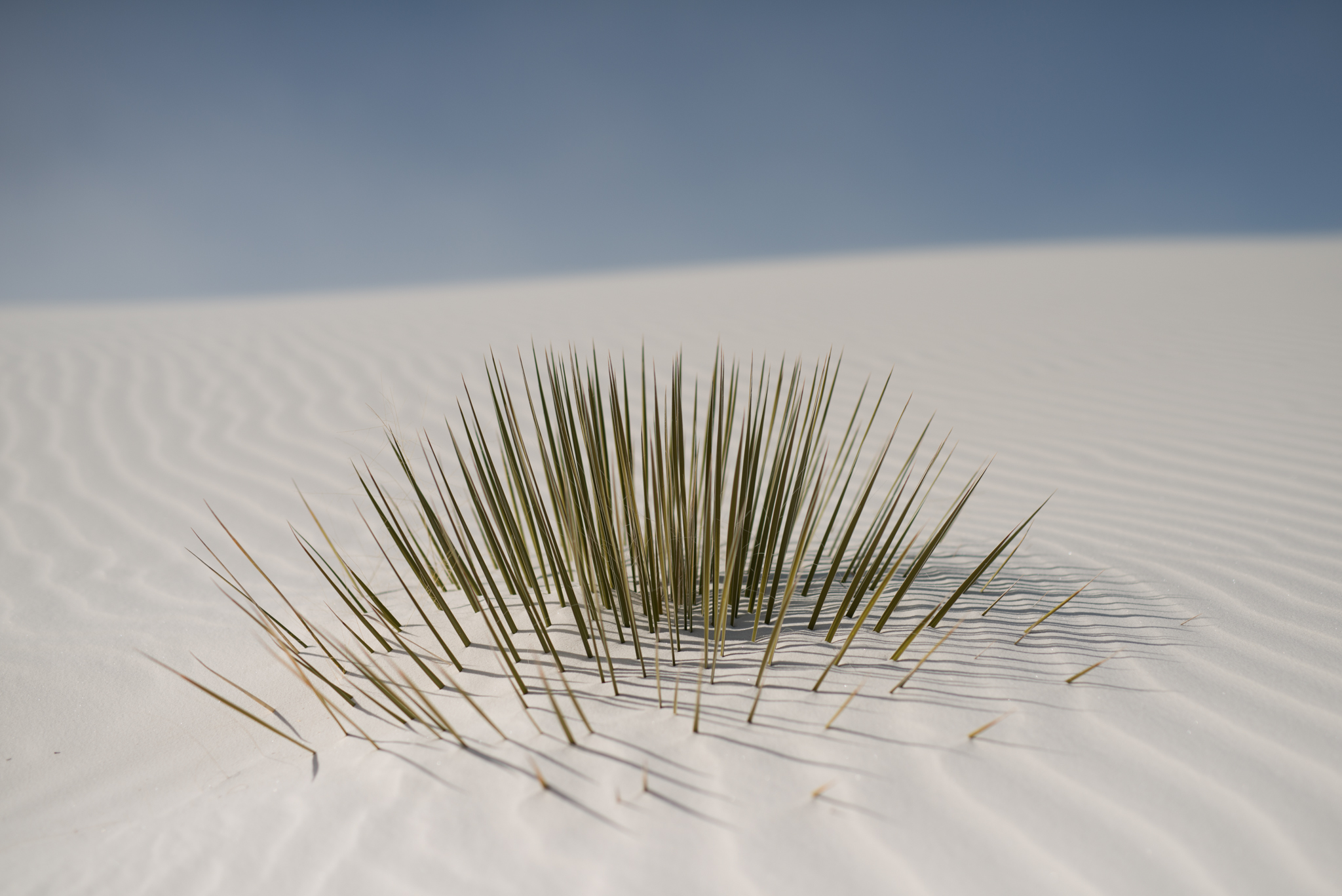 ©The-Ryans-Photography---White-Sands-National-Monument,-New-Mexico-Travel-006.jpg