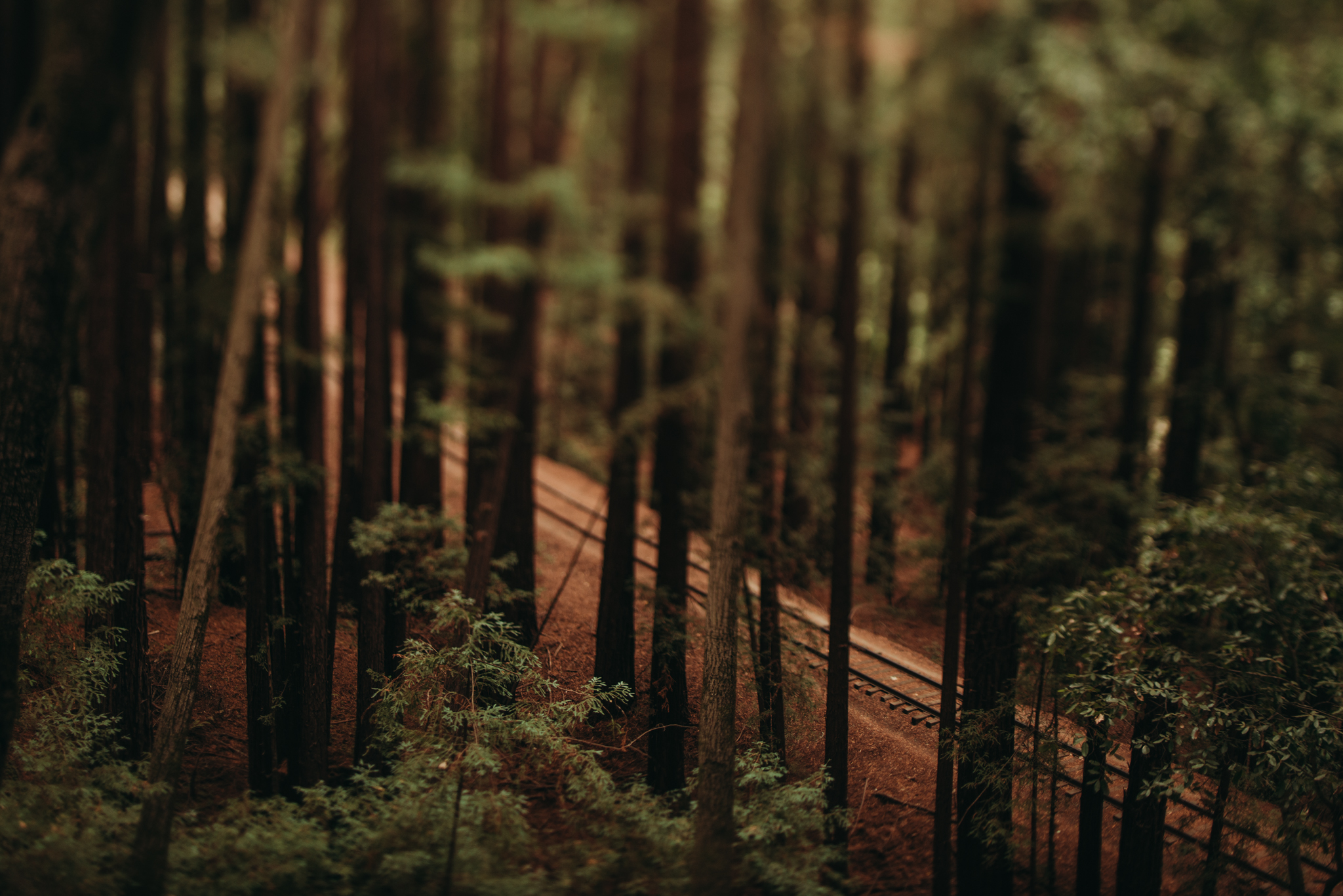 ©The-Ryans-Photography---Santa-Cruz-Lifestyle-Travel-006.jpg