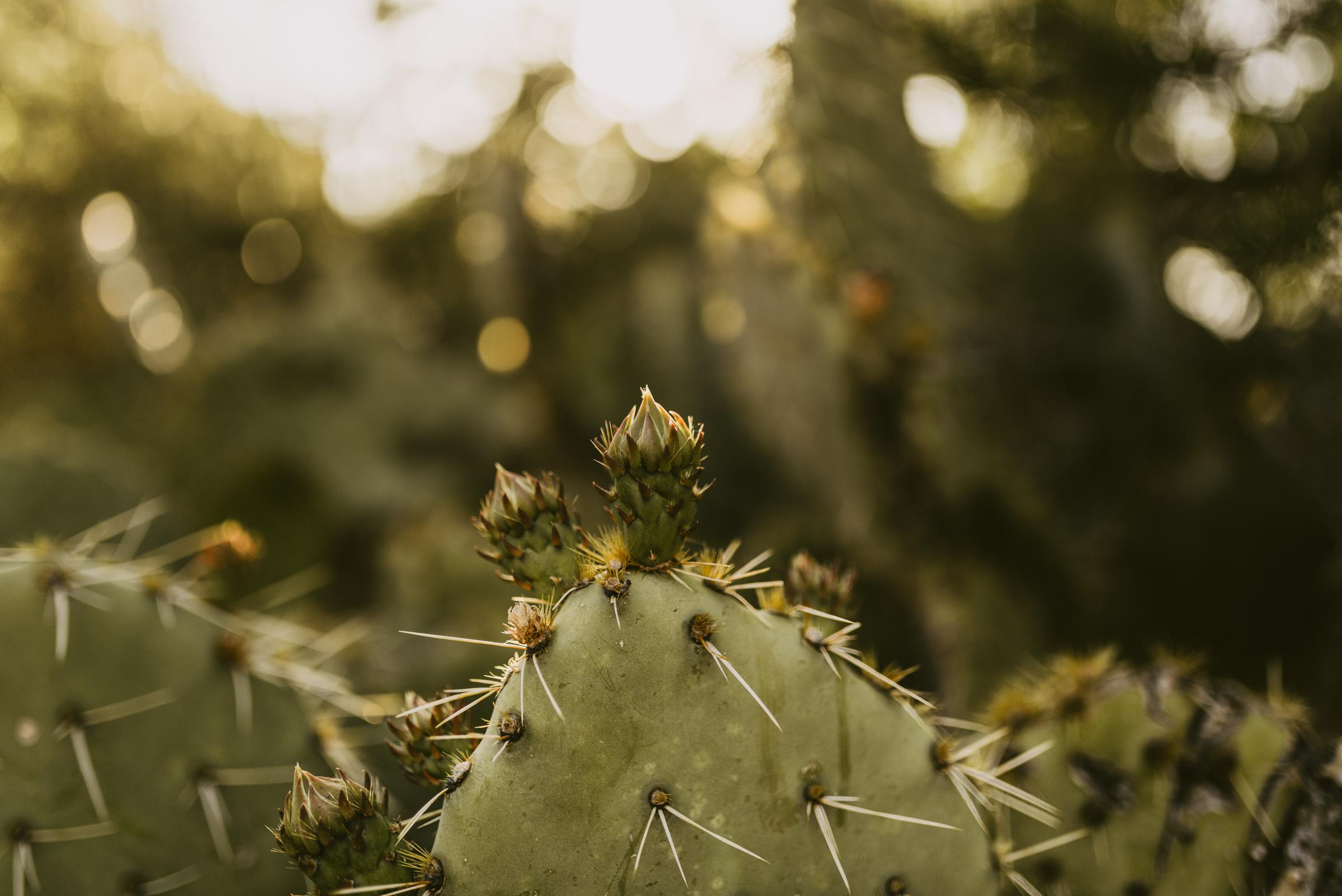 ©The Ryans Photography - Sedona Travel-26.jpg