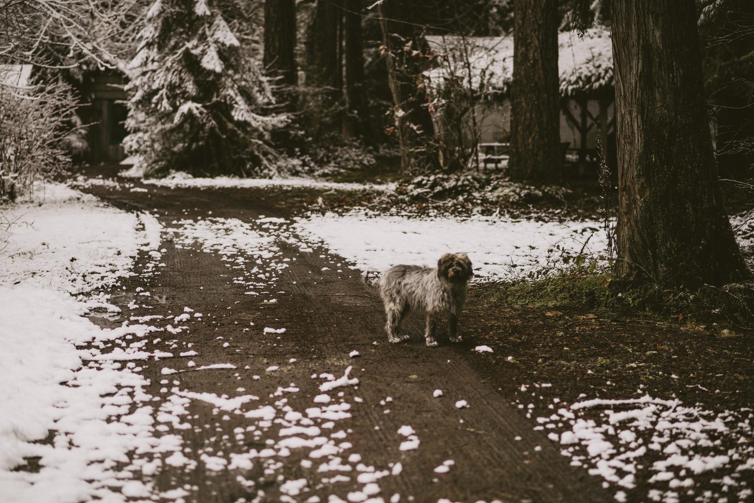 ©TheRyans- Winter Travel, Colton Oregon -19.jpg