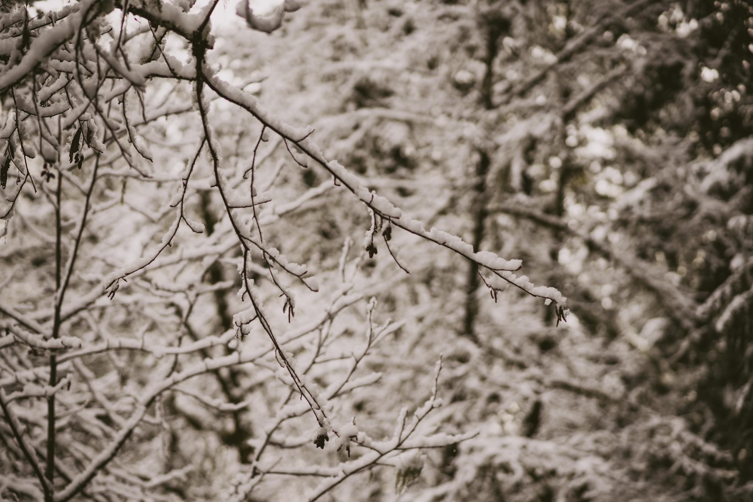 ©TheRyans- Winter Travel, Colton Oregon -20.jpg