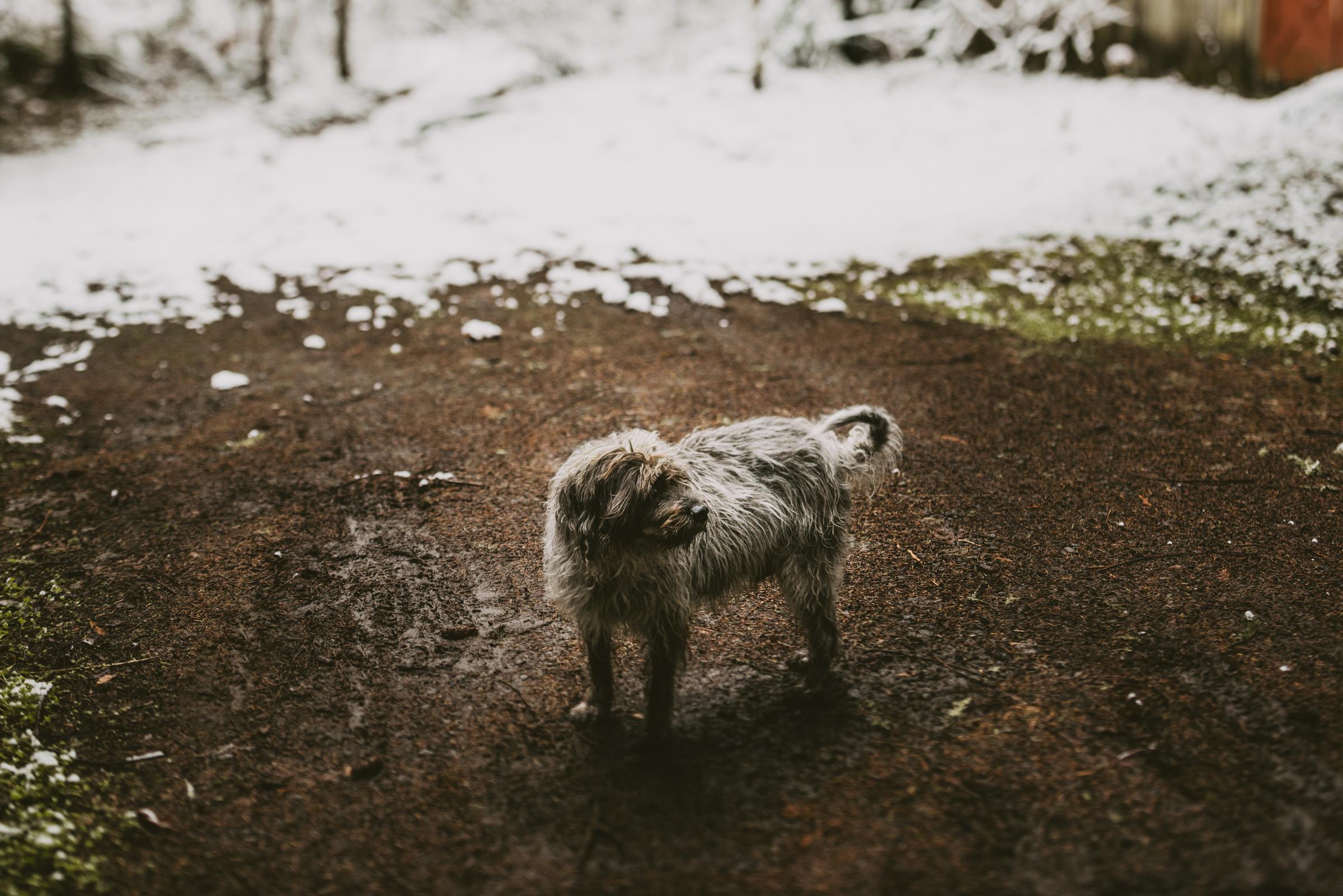 ©TheRyans- Winter Travel, Colton Oregon -23.jpg