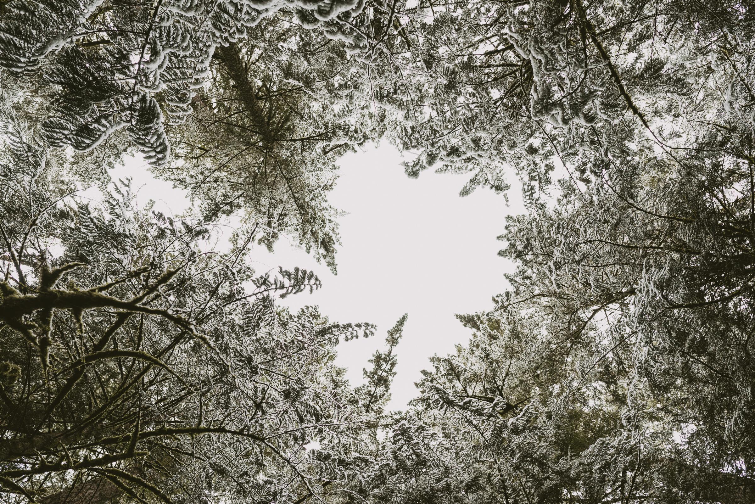 ©TheRyans- Winter Travel, Colton Oregon -27.jpg