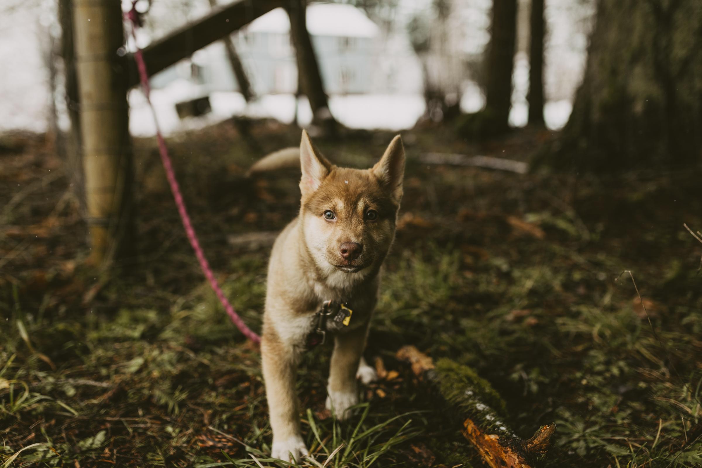 ©TheRyans- Winter Travel, Colton Oregon -30.jpg