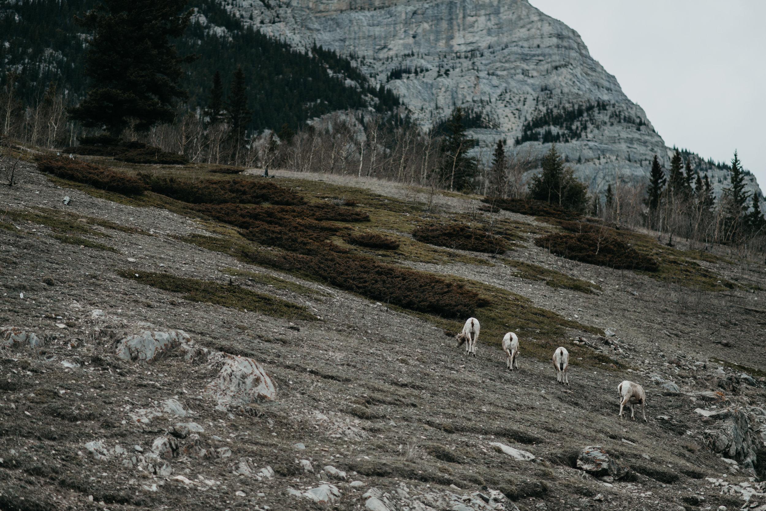©The Ryans Photo - Banff, Alberta Travel-35.jpg