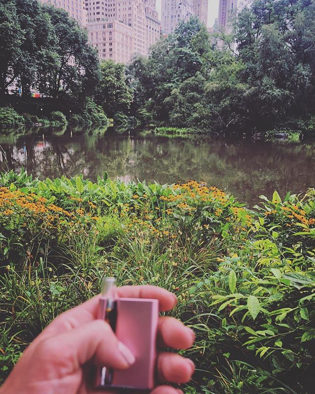 Some R&D testing of the new full-spectrum Nepalese Kush oil 🔥 in a certain park that is central. 🏙Thanks to @echoelectuary for the kickass @ccellofficial pink battery gift💞! It has become a fave accessory! Still working on finding the most sustainable, nontoxic cartridge, but Mindful single strain should be coming soon 💚 #co2 #mindful #mindfulpdx #fullspectrum #organic #cartridge #craft #cannabis #cannabiscommunity #pdxcannabis #weshouldsmoke #liberate #weed #cannabisculture #nepalesekush