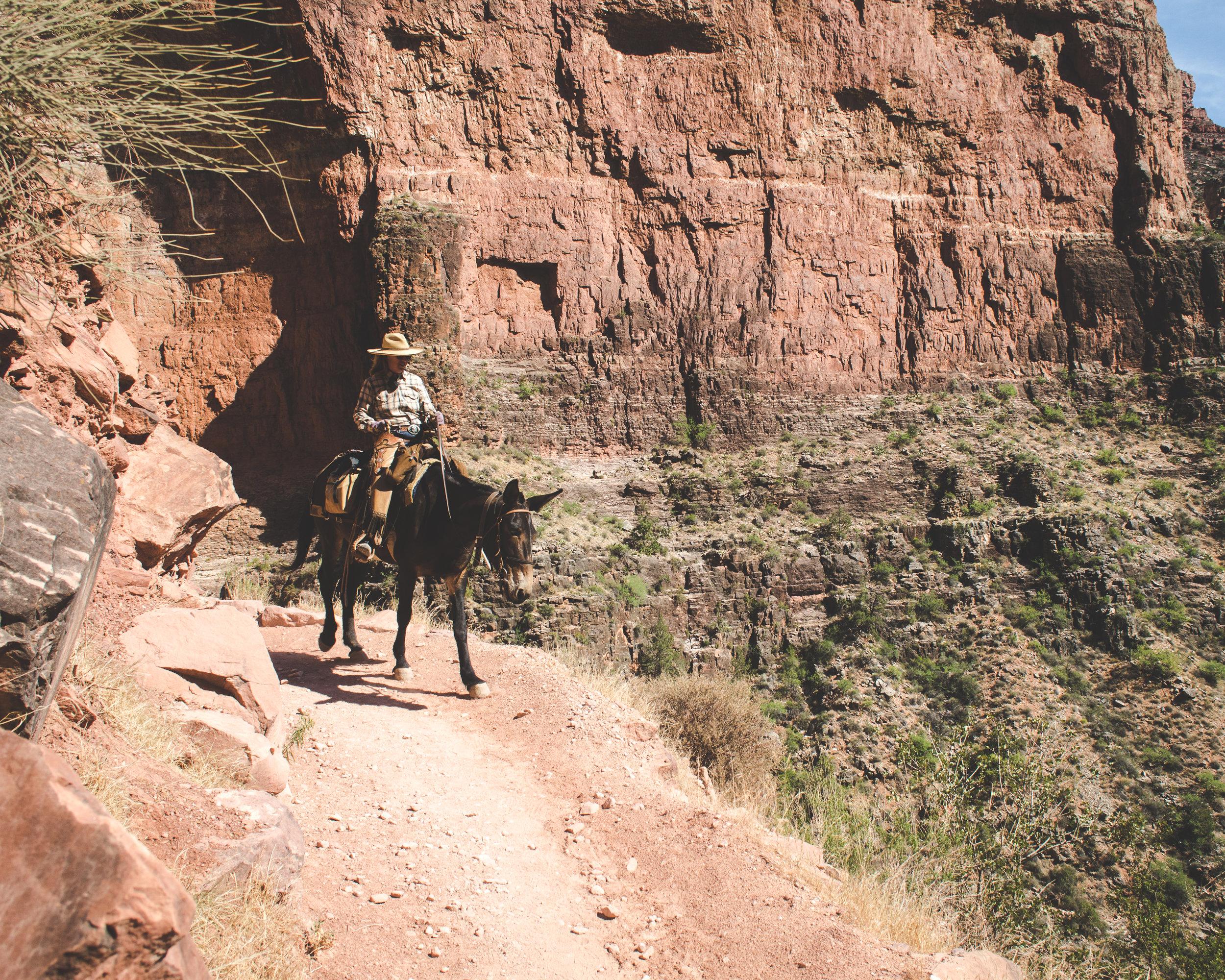 2018 Grand Canyon Trip WL-92.jpg