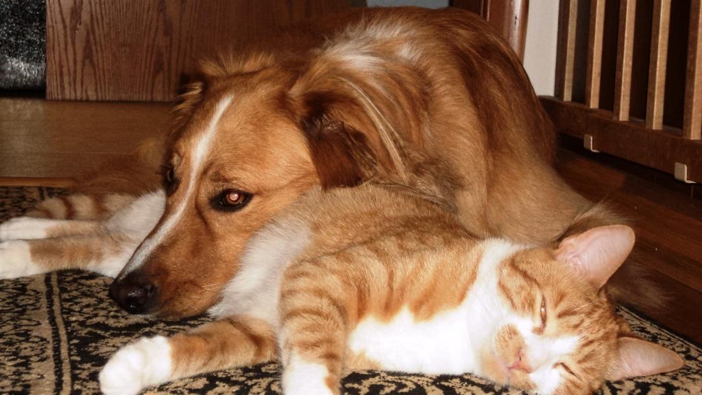 best friends 2.jpg