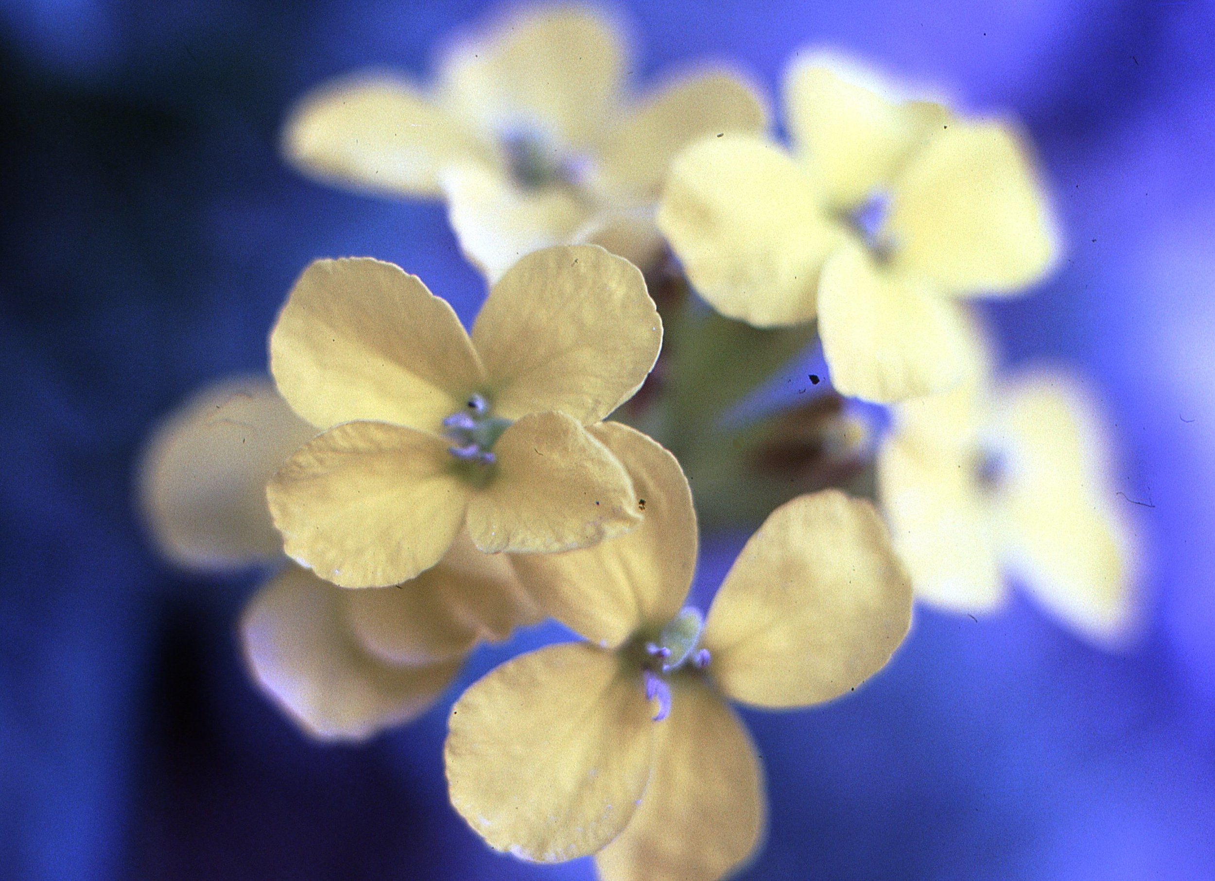 flowers038.jpg