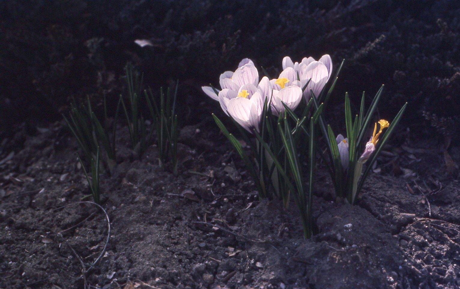 flowers050.jpg
