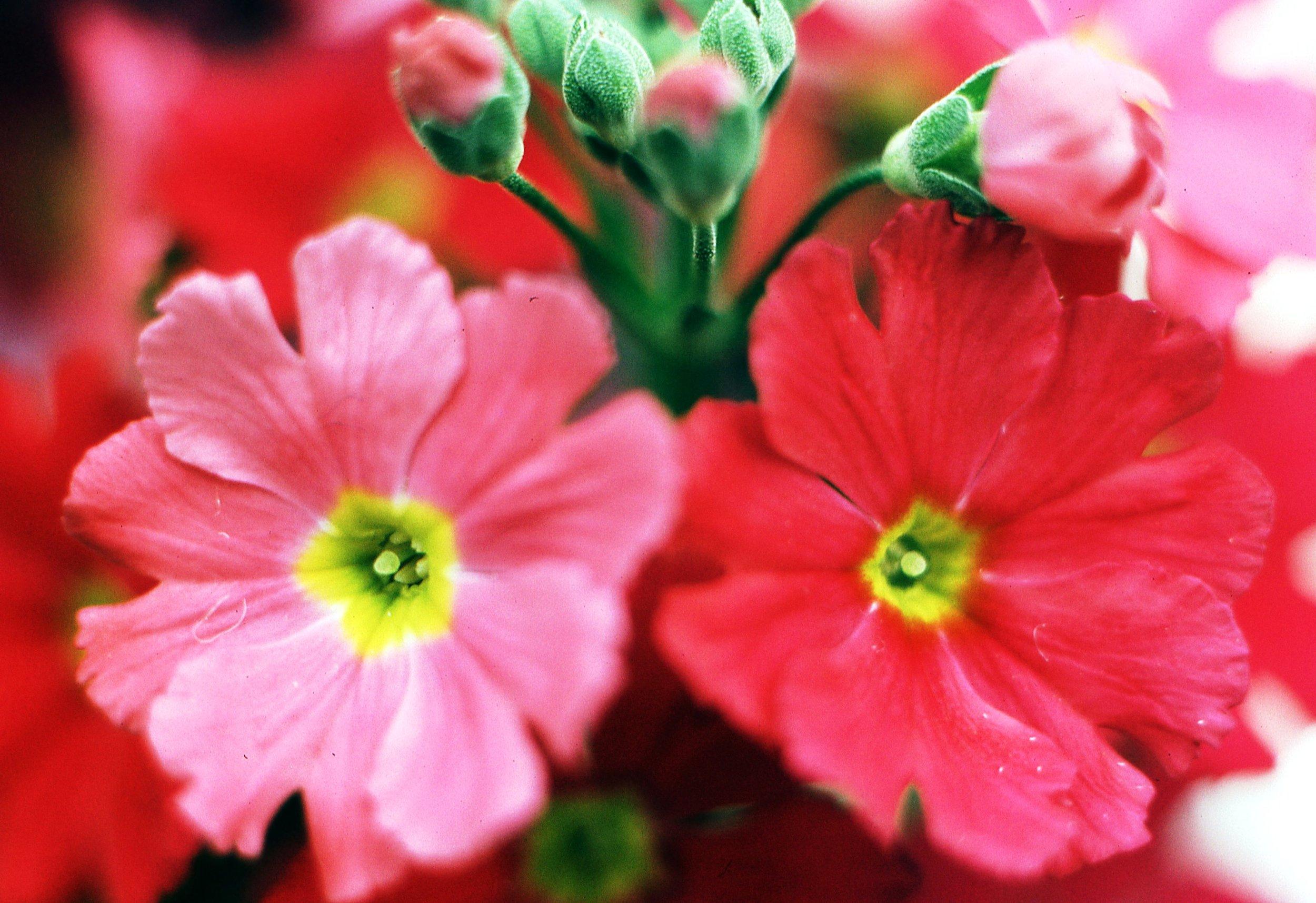 flowers046.jpg