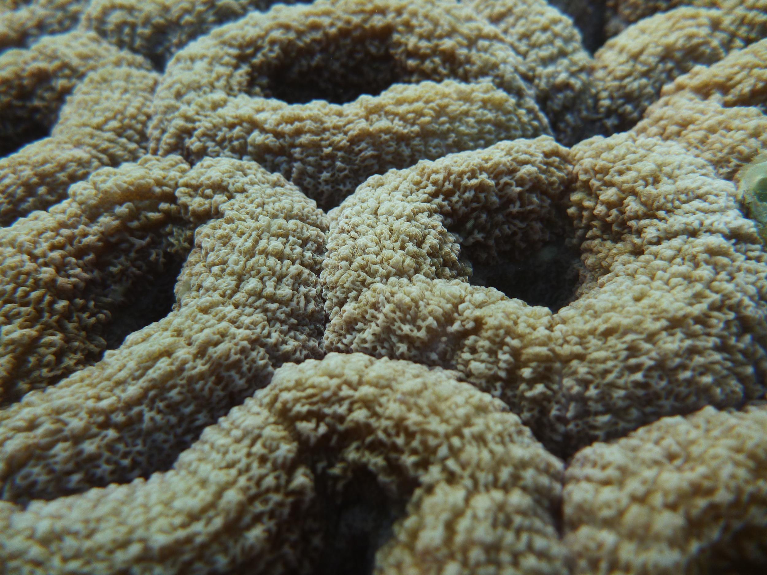 A closeup of a large polyp....