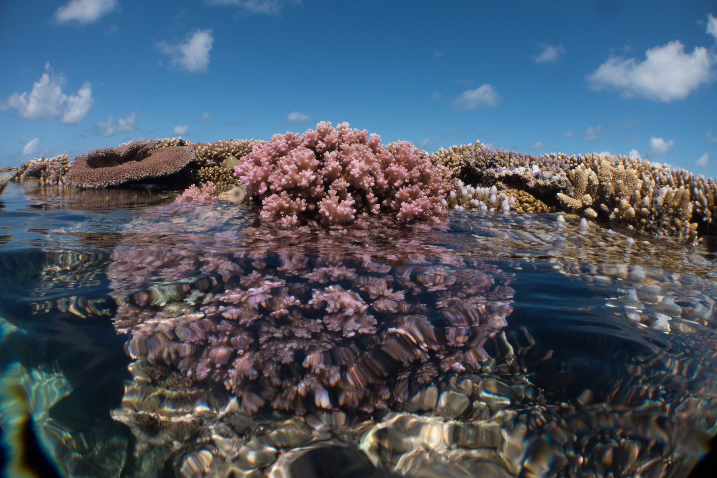 Why is the top of a reef flat?