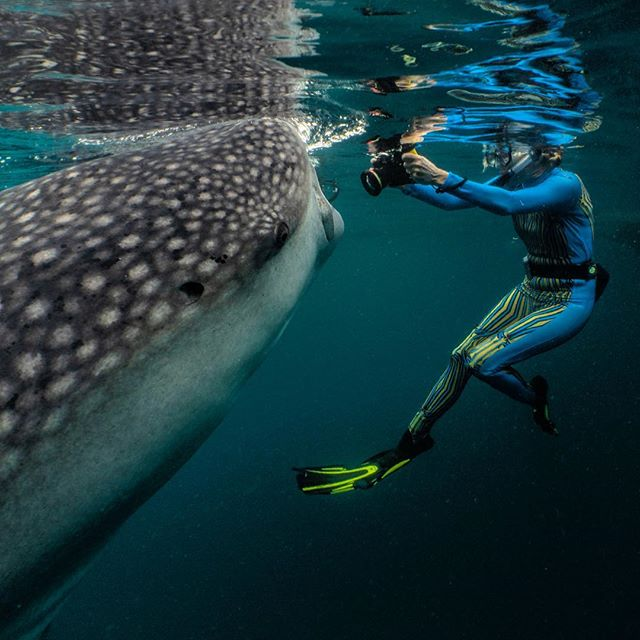 In West Papua looking for satellite tagged Whalesharks with Conservation International to learn about the movements of these gentle giants. #legendsofthedeep #whaleshark https://www.thesevenseas.net/whalesharks-west-papua/