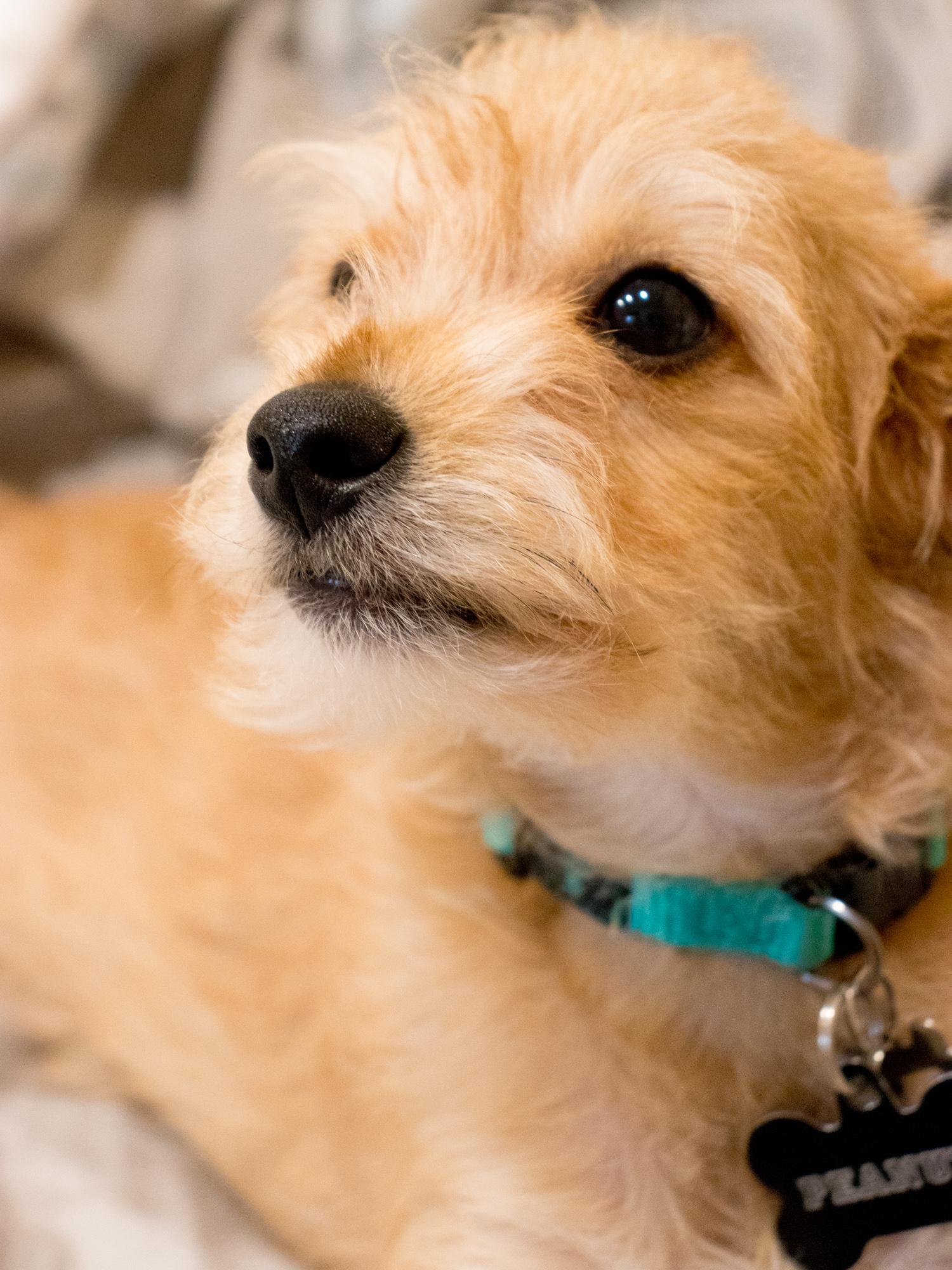 Peanut the Puppy