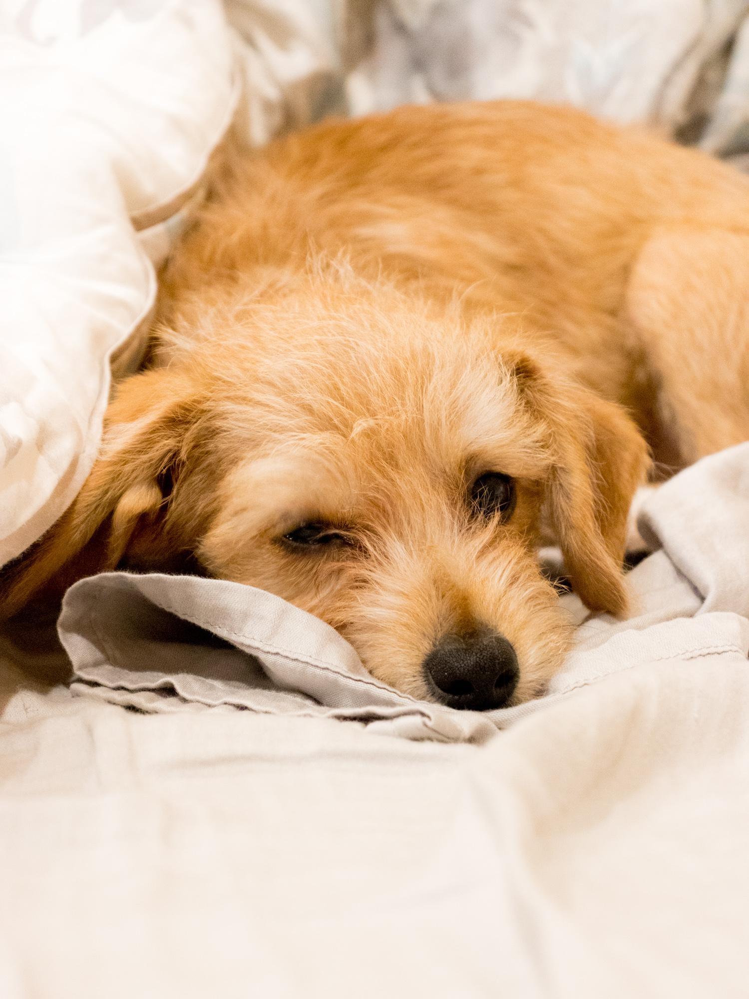 Goodnight Peanut the Puppy