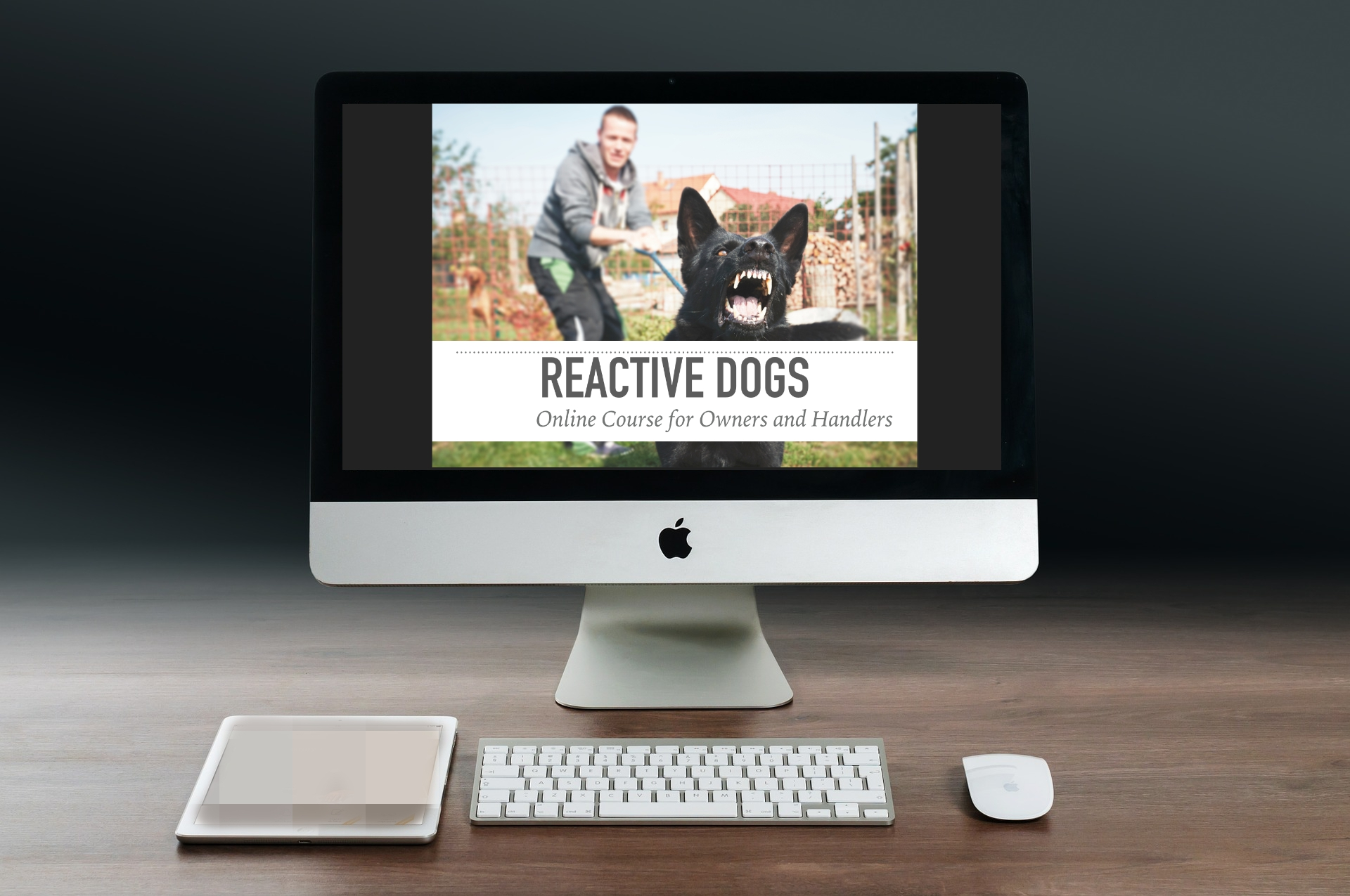 Reactive Dogs Online.jpg