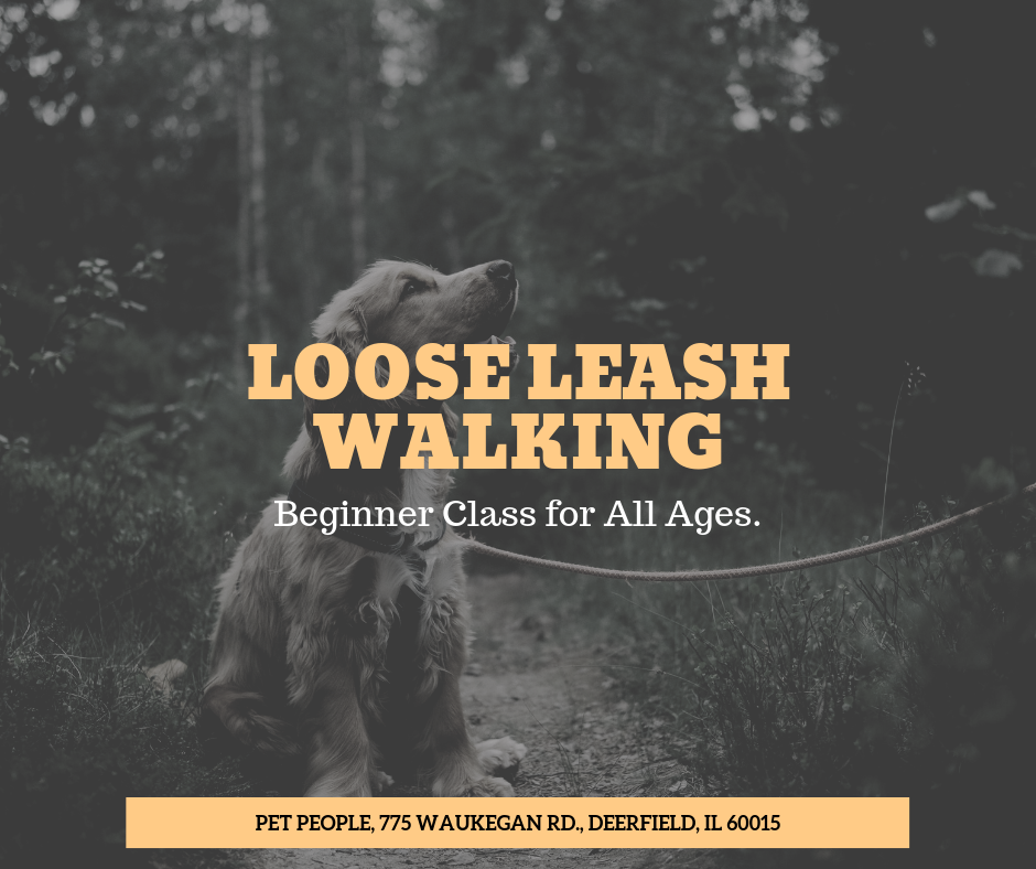 Copy of Loose leash walking class-15.png