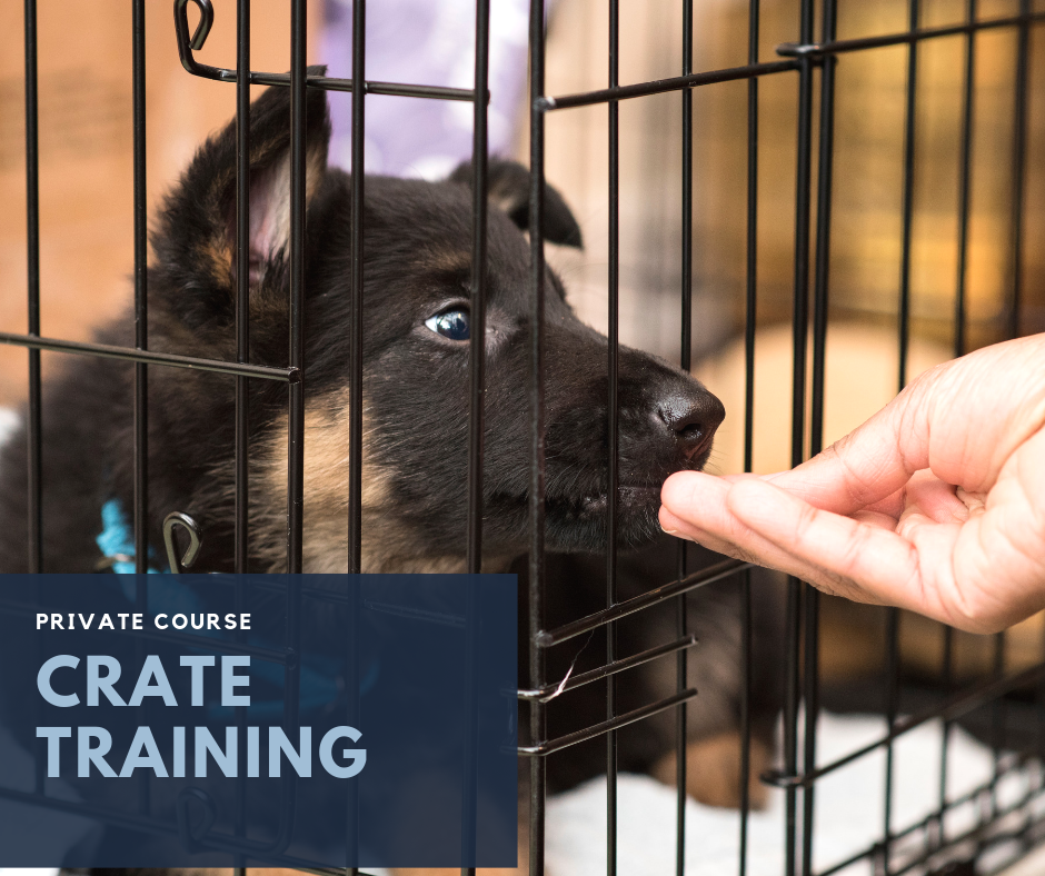 - This course aims to work stationing and crate training from the introduction of management and foundational exercises to fluency in the home environment. Consisting of 3 (30 min.) targeted private training sessions, booked at your convenience and held at Pet People, Deerfield IL. This targeted course will give you one on one time with a trainer to work specifically on conditioning the crate as an enjoyable place to stay and relax.