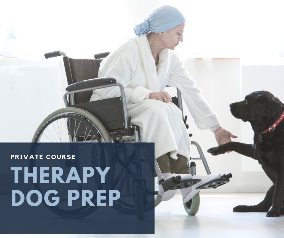 - Interested in Therapy Dog work? If so, this private course package is for you! Consisting of 6 (30 min.) targeted private training sessions, booked at your convenience and held at Pet People, Deerfield IL. This targeted course will give you one on one time with a trainer to work specifically on preparation for Therapy Dog Examination.Prerequisites: Introductory or Basic Manners and Obedience