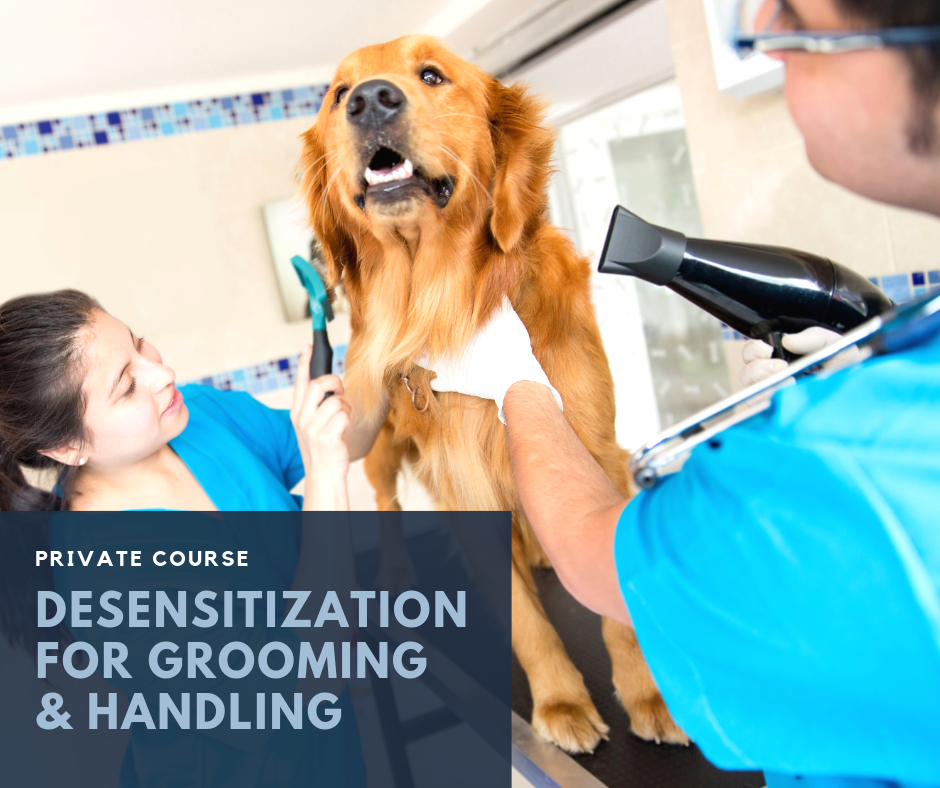 - Does your dog struggle with any of these procedures?- Handling- Brushing- Wiping- Clipping- Nail Trims- Physical Exams (i.e. ears, teeth, etc.)- VaccinesIf so, this private course package is for you! Consisting of 6 (30 min.) targeted private training sessions, booked at your convenience and held at Pet People, Deerfield IL. This targeted course will give you one on one time with a trainer to work specifically on building your pet's confidence and comfort with handling procedures using desensitization and counter conditioning.