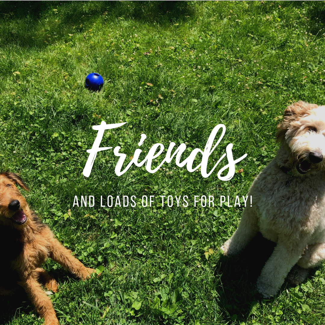 Familiar faces, in a fun new place! With only small groups we make sure that socialization is safe, and fun for everyone.