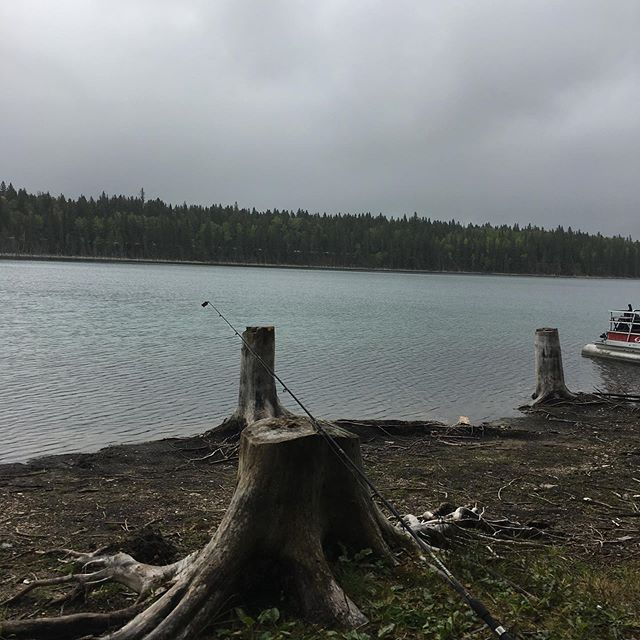 Hard to believe these stumps were under water a couple of years ago! #lakelevelgoingdown #finally #relieved #eastbluelake