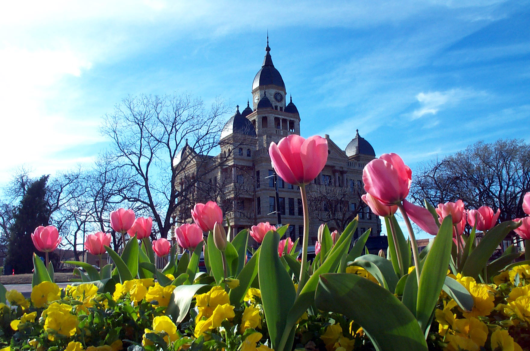 Denton Courthouse Tulips by Christine Gosset