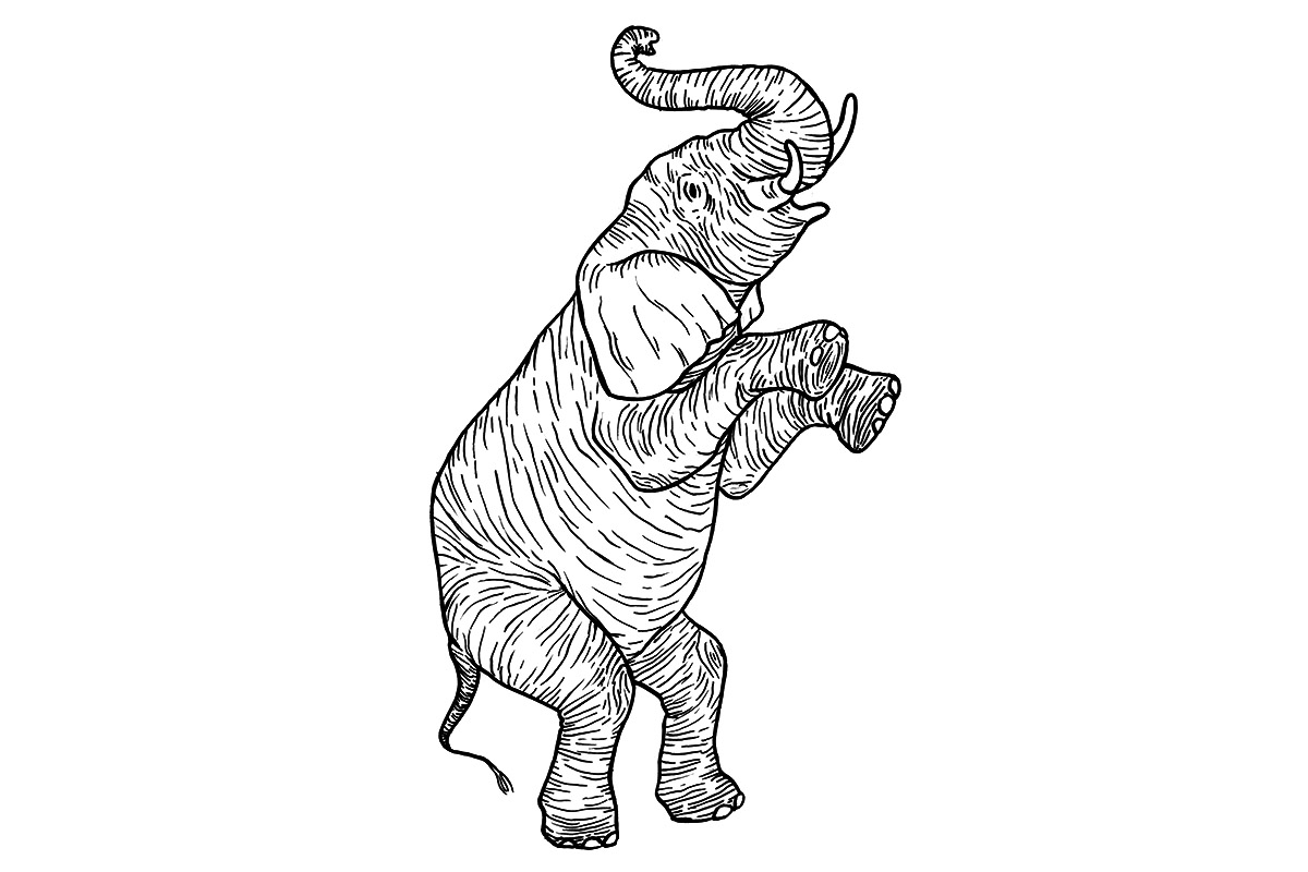 elephant003.jpg